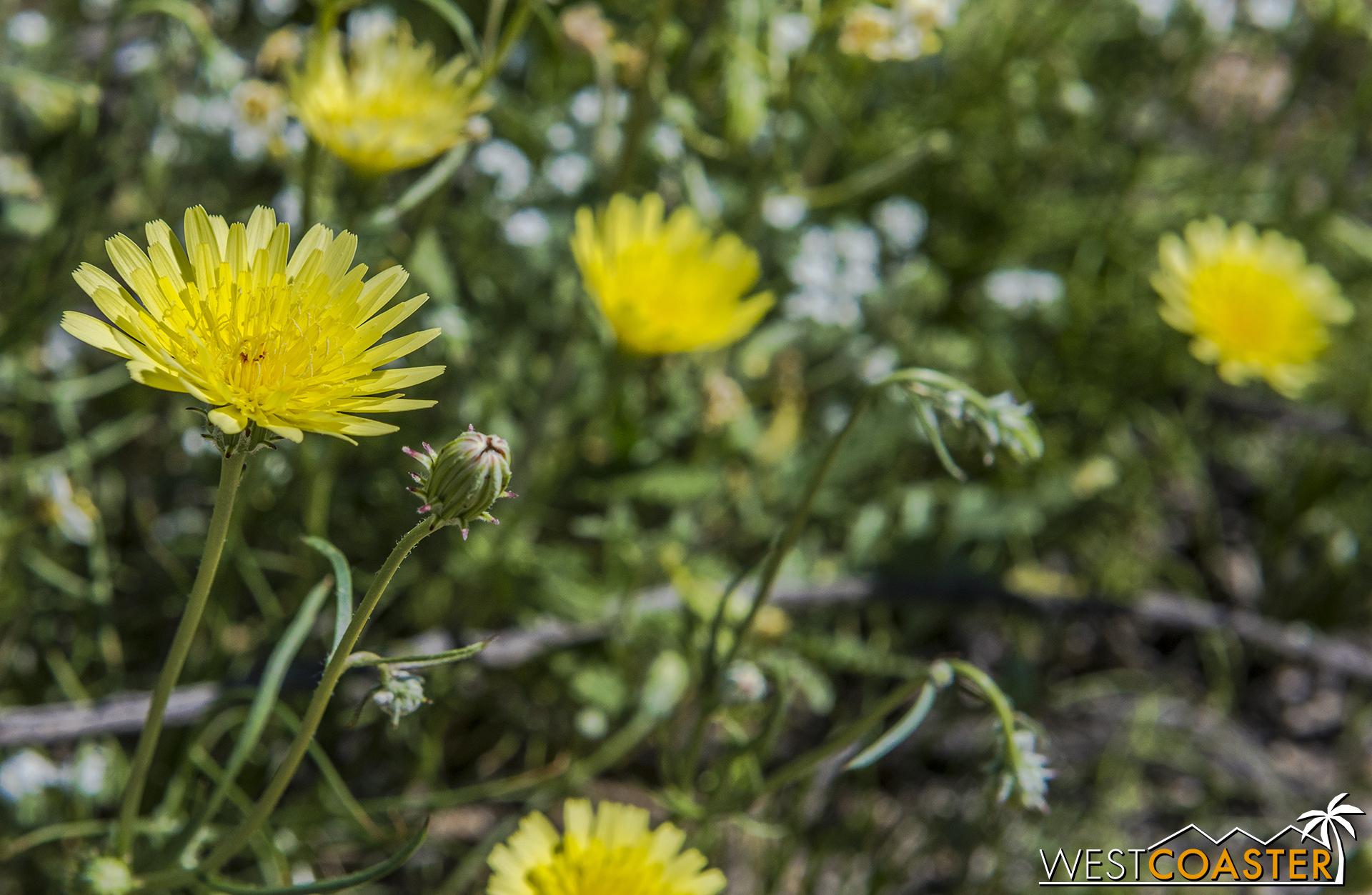 BorregoSprings-17_0316-B-Flowers-0002.jpg