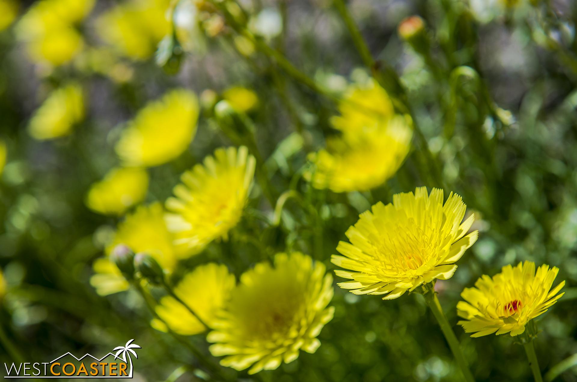 BorregoSprings-17_0316-B-Flowers-0005.jpg