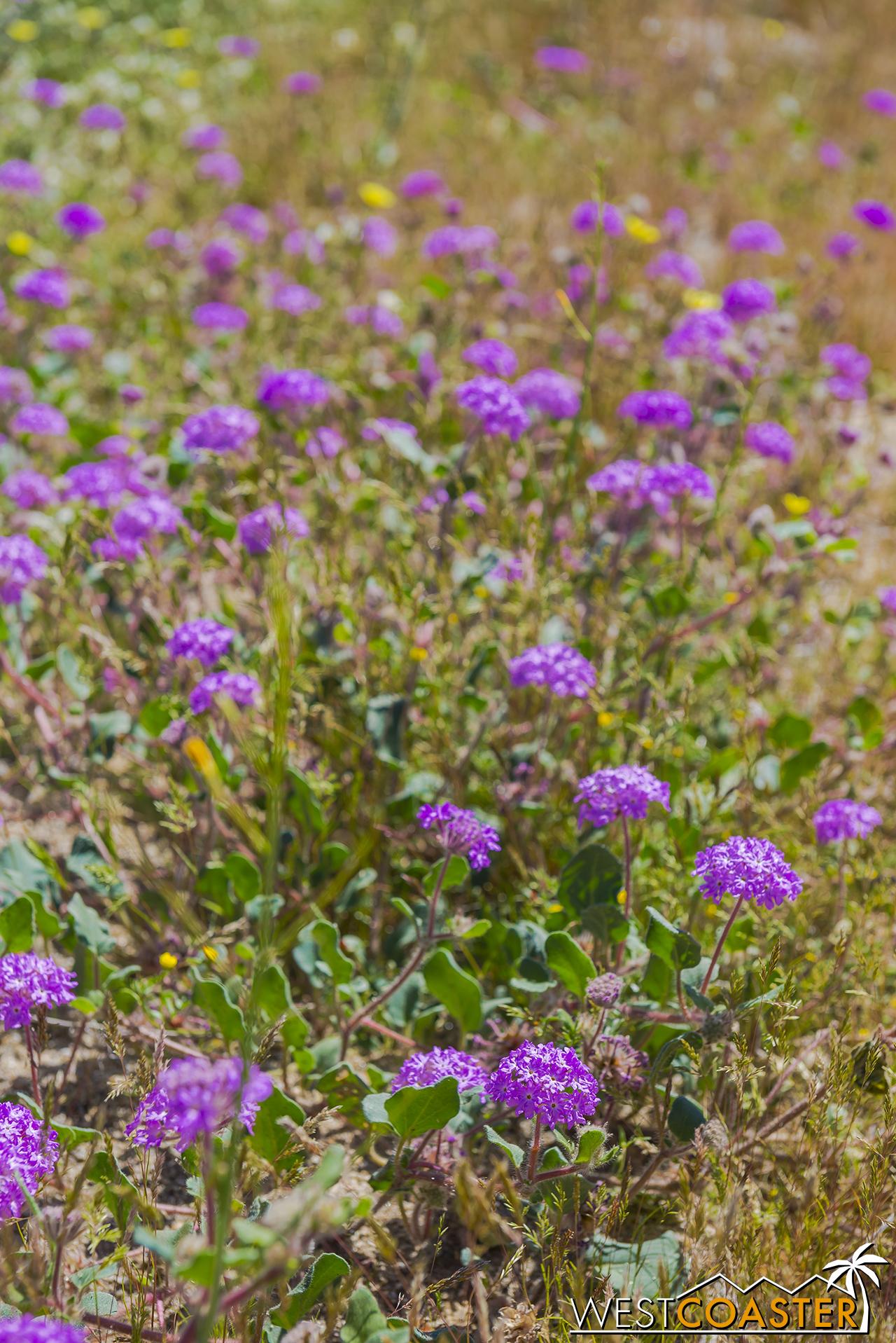 BorregoSprings-17_0316-B-Flowers-0008.jpg