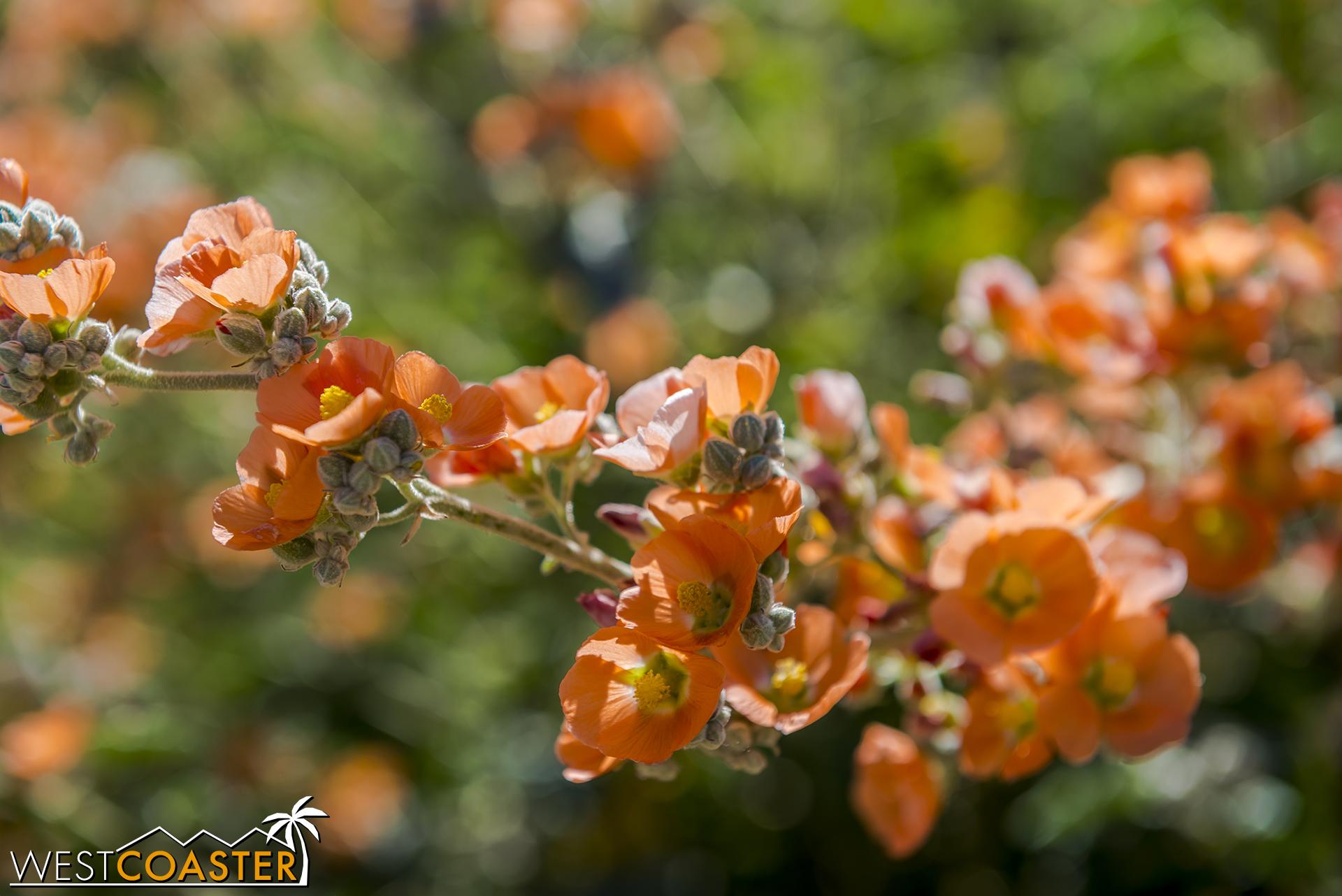 BorregoSprings-17_0316-A-BotanicalGardens-0005.jpg