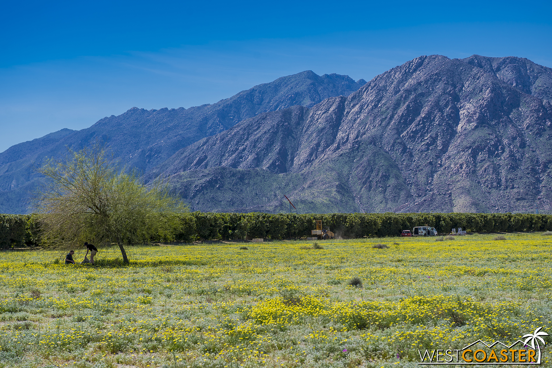 The mountain backdrop of Anza Borrego State Park is spectacular.