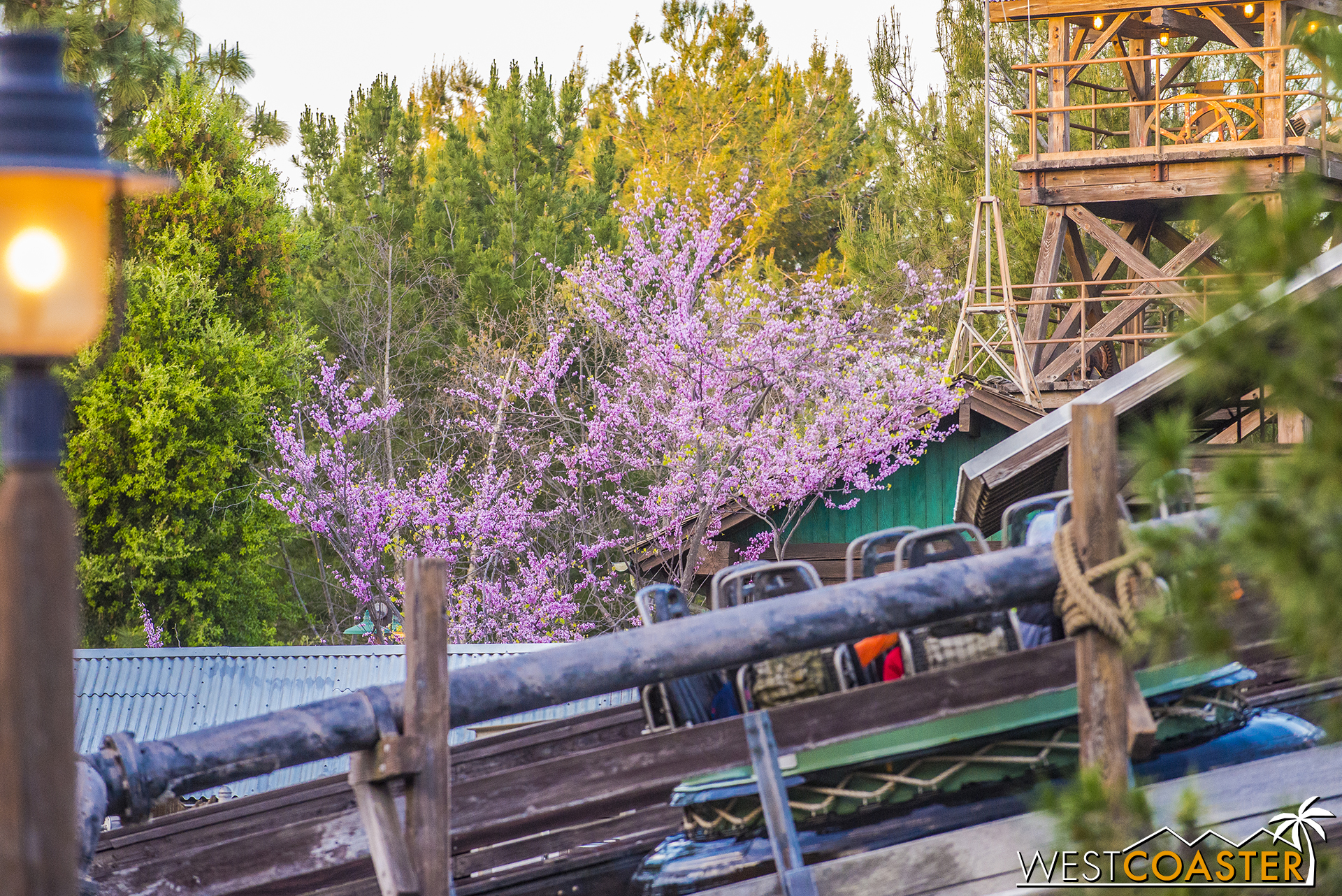 ...Or a random tree behind Grizzly River Run...