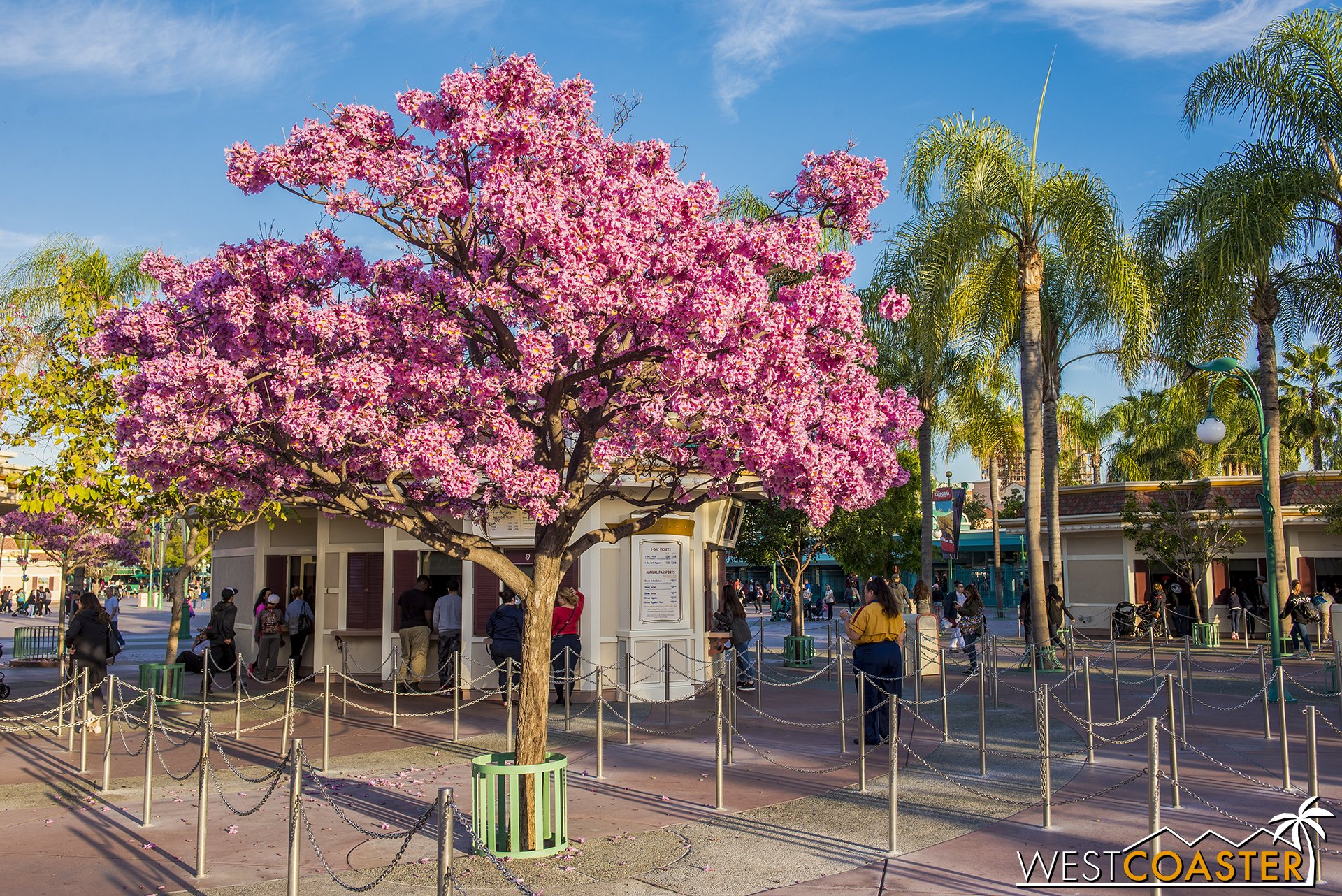 Springtime at the Disneyland Resort means pink takes over everywhere.