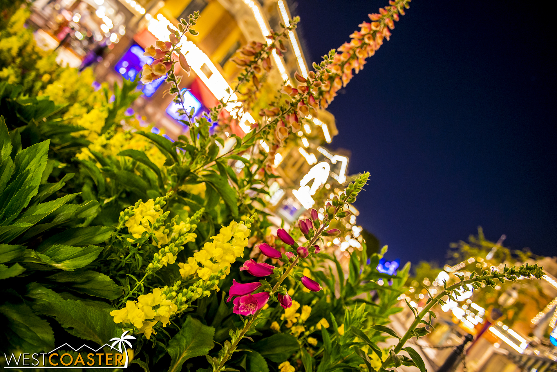 Gotta hand it to the Disneyland horticulturists. They can do some great work!