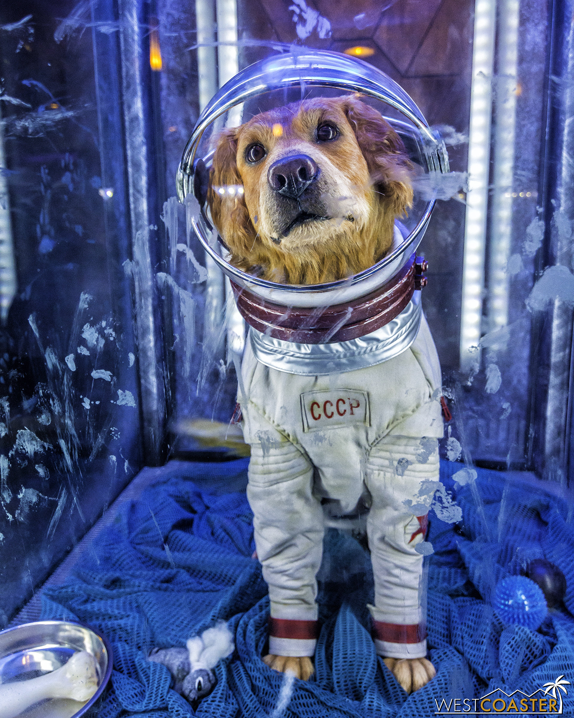And Cosmo the Dog, who himself is an easter egg in the movies.  (Photo courtesy of Brandon Joseph of   DizFeed  .)