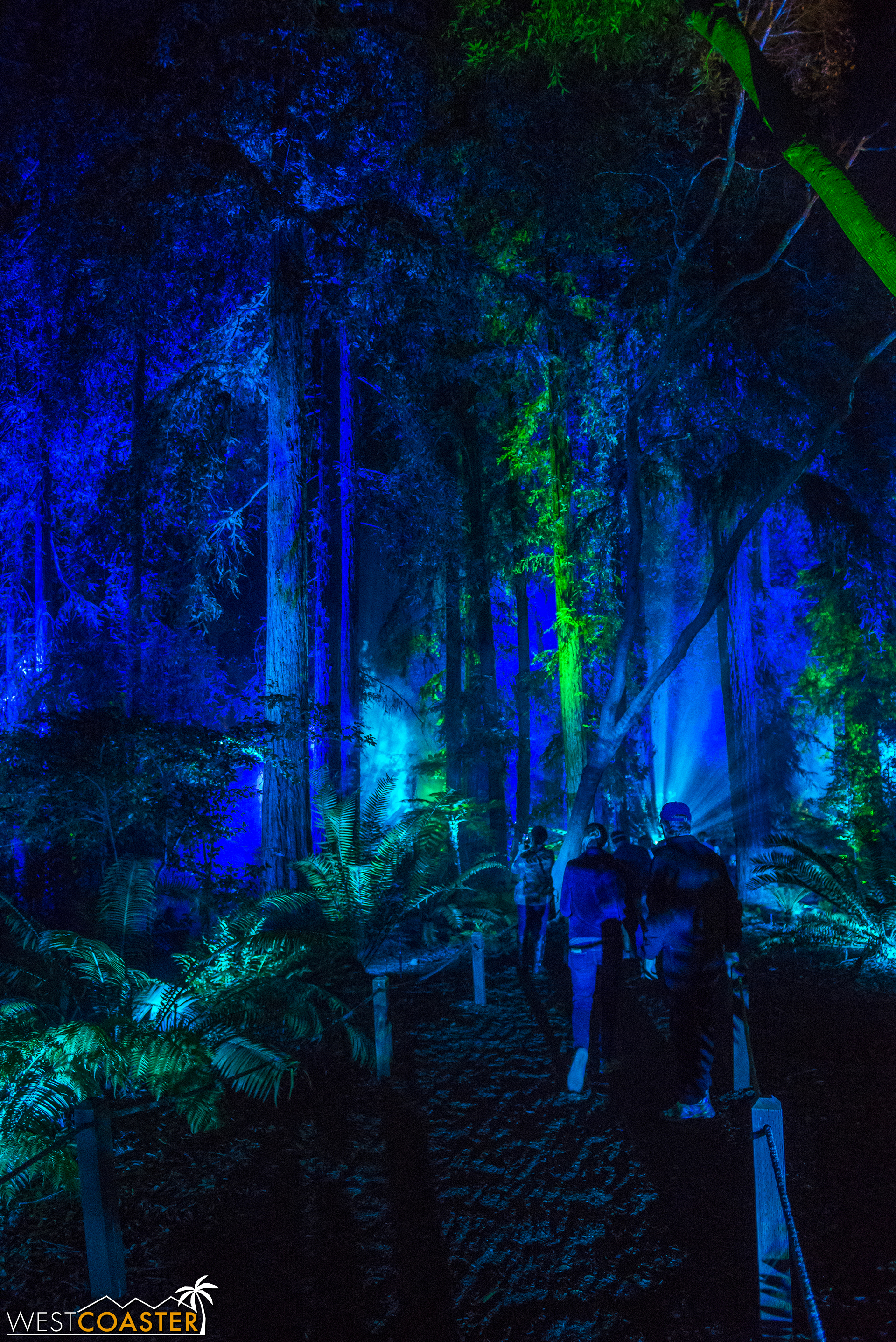 Though this is a real and very old forest, the lighting gives it a theme park ride or movie set feel--if only because the environment feels otherworldly!