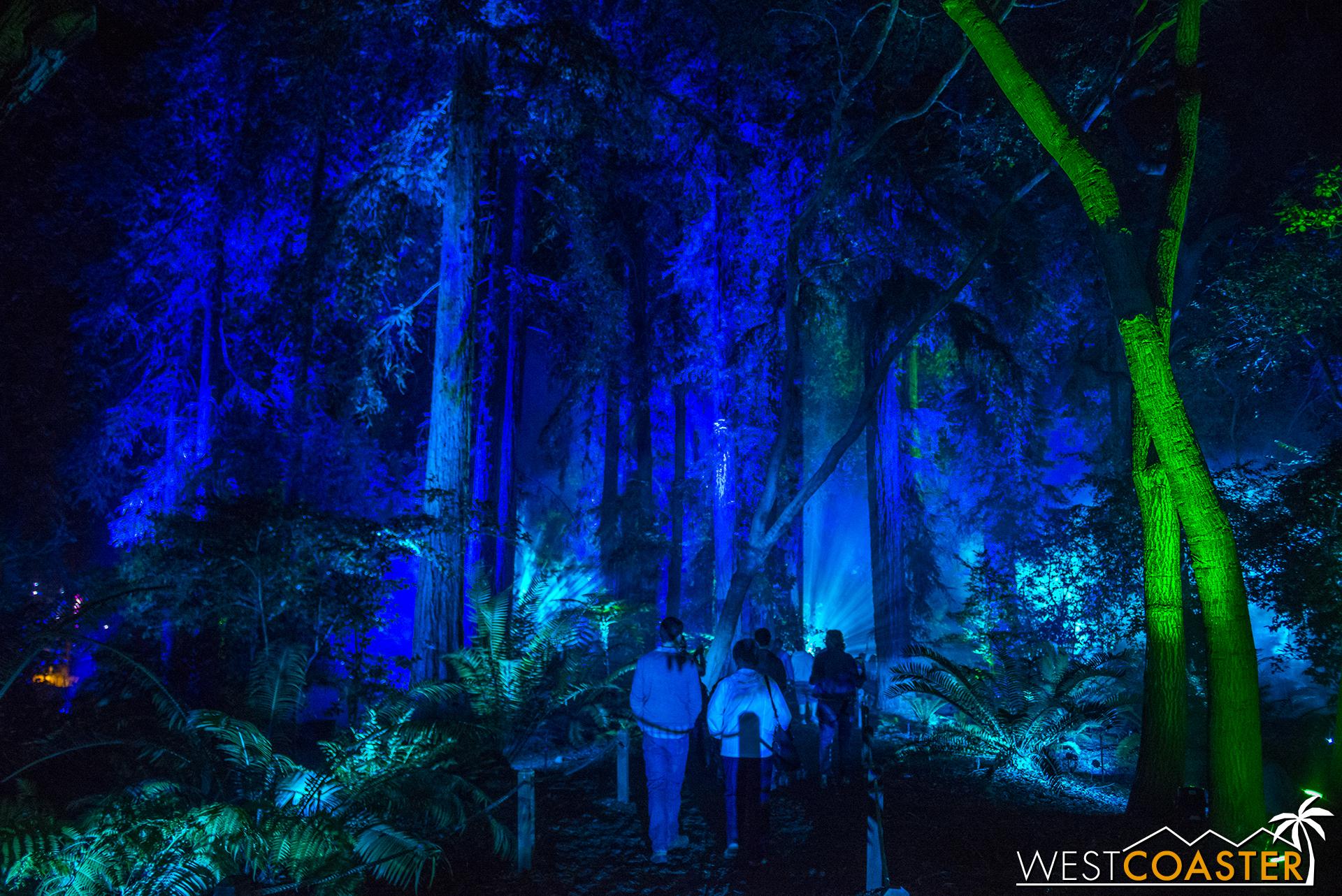 Descanso-17_1201-08-AncientForest-0002.jpg