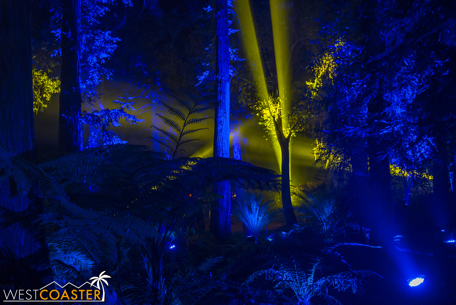 Descanso-17_1201-08-AncientForest-0006.jpg