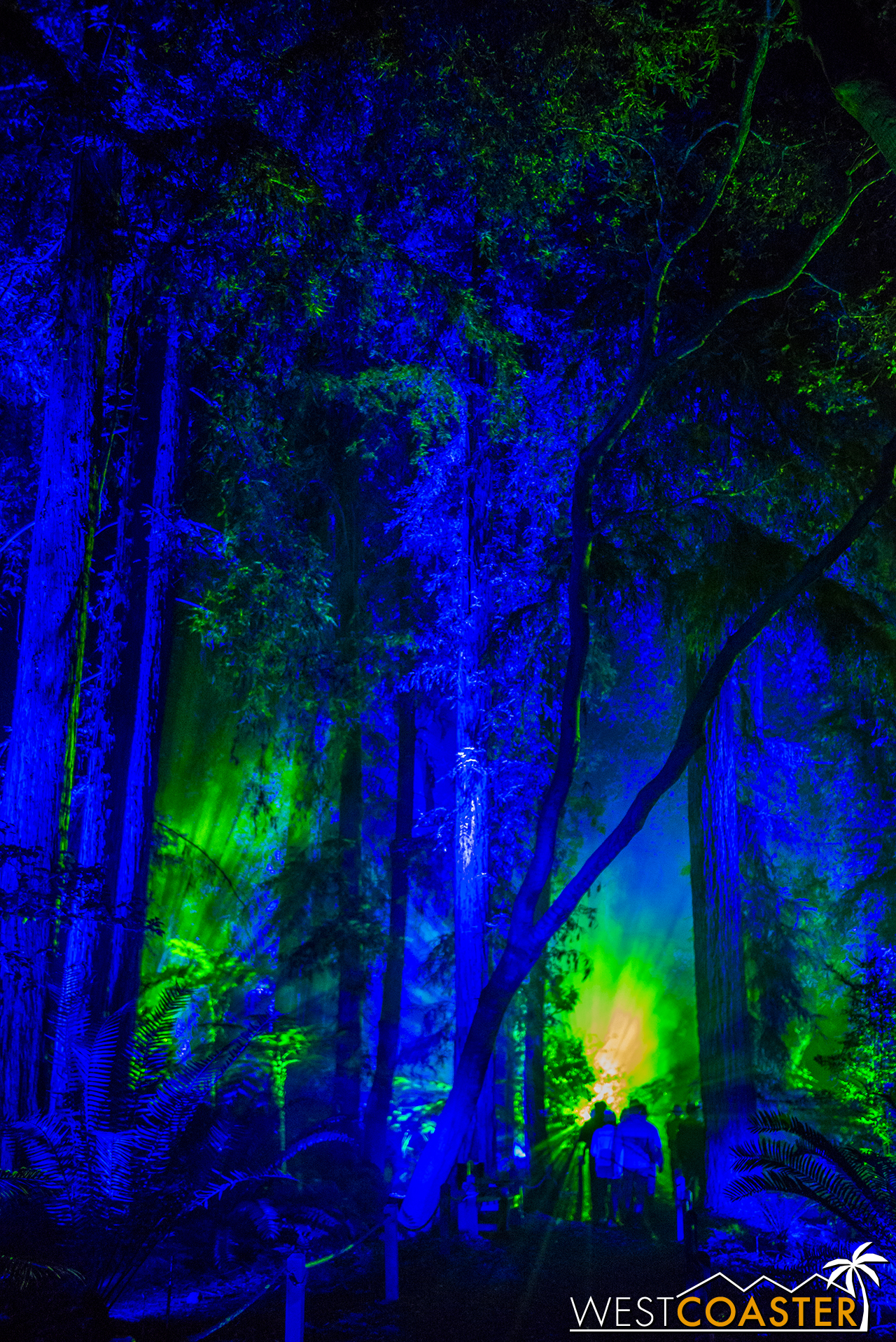 Descanso-17_1201-08-AncientForest-0004.jpg