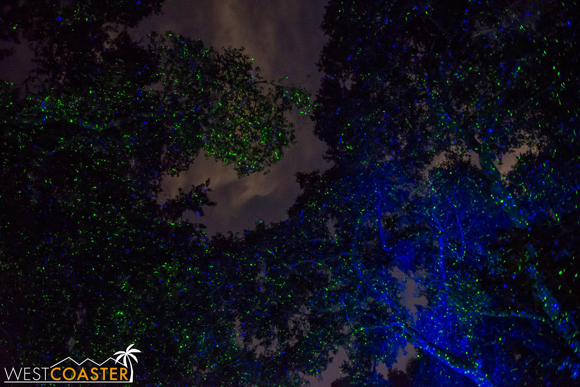 Descanso-17_1201-08-AncientForest-0010.jpg
