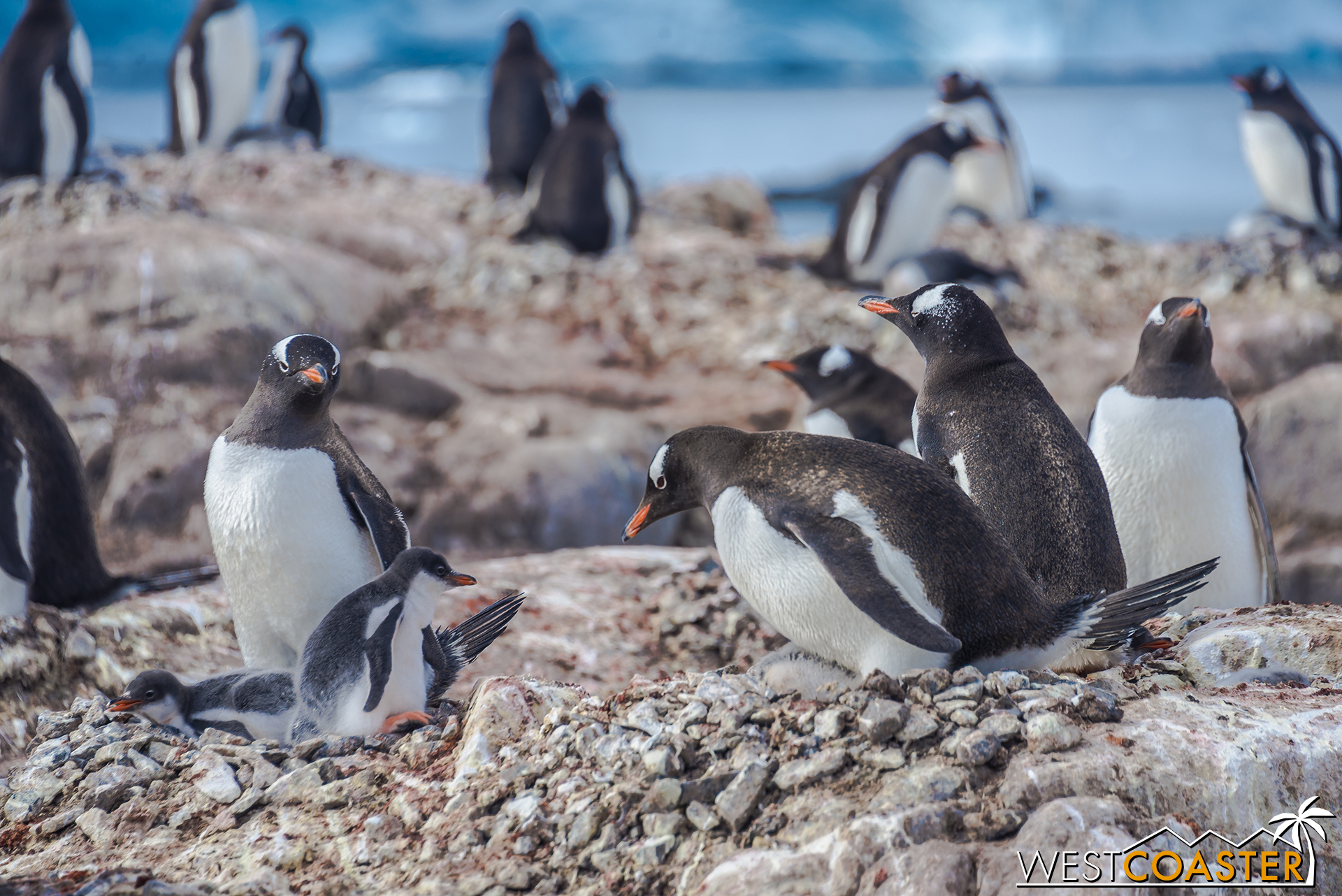 Unsurprisingly, Antarctica gave the opportunity to see literally thousands of penguins.