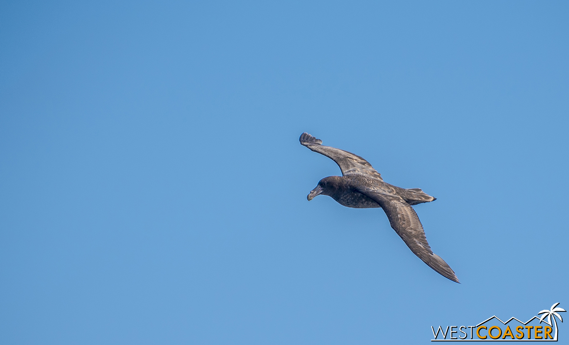 A Petrel takes flight next to our boat.
