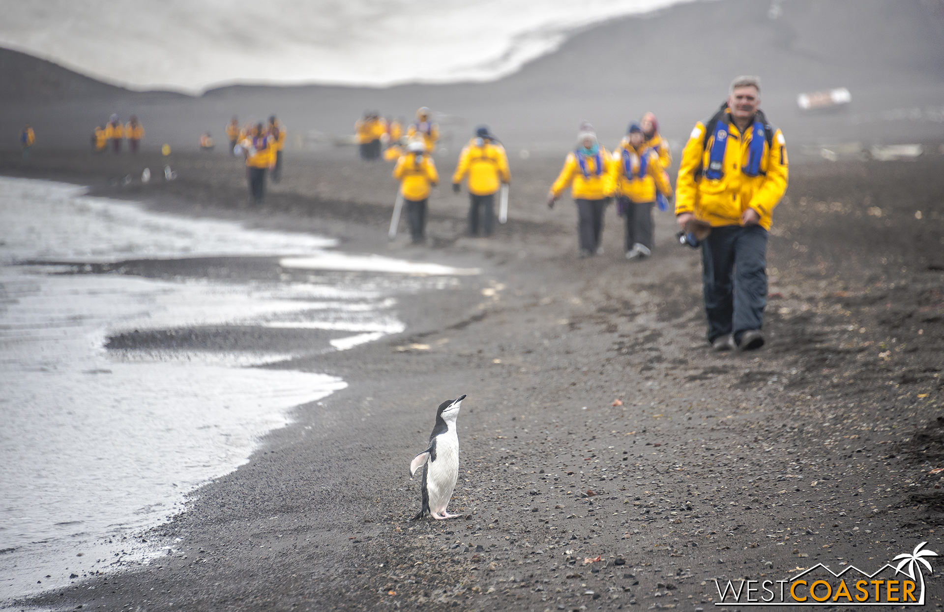 """""""Chinstrap Charlie"""" (not his real name) greets folks on shore."""