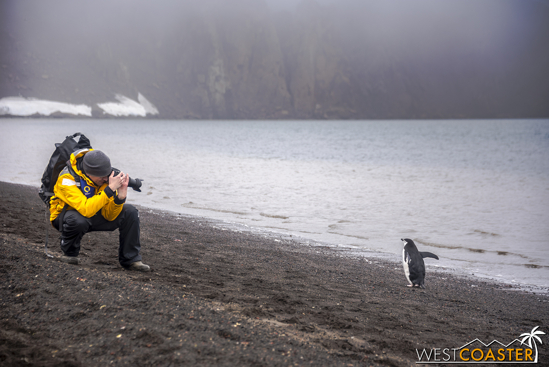 The penguins are subject to numerous photographers and photo takers.