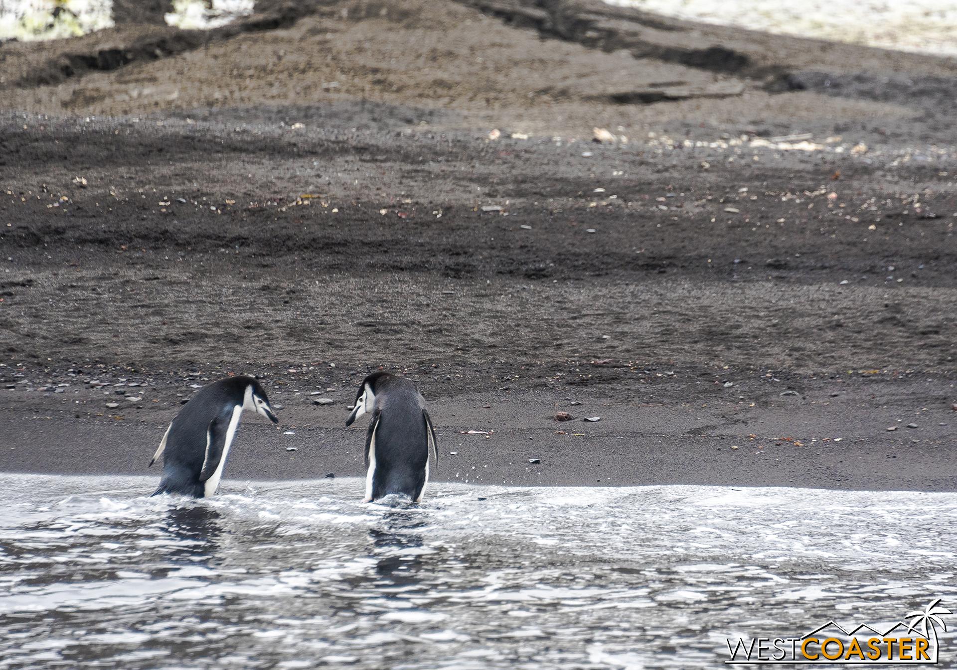 Antarctica-18_0207-0029.jpg
