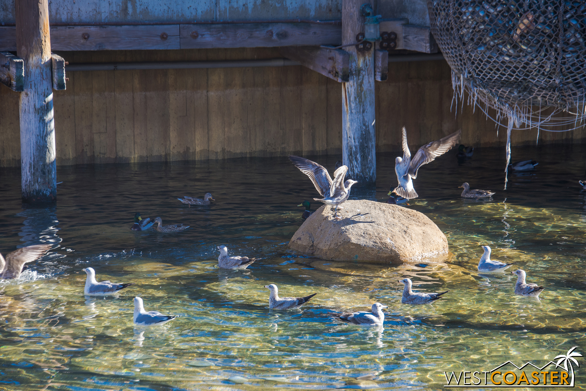 Also, these gulls were having a bread battle over in the water by Pacific Wharf.  That's what happen when you tread on bird turf.