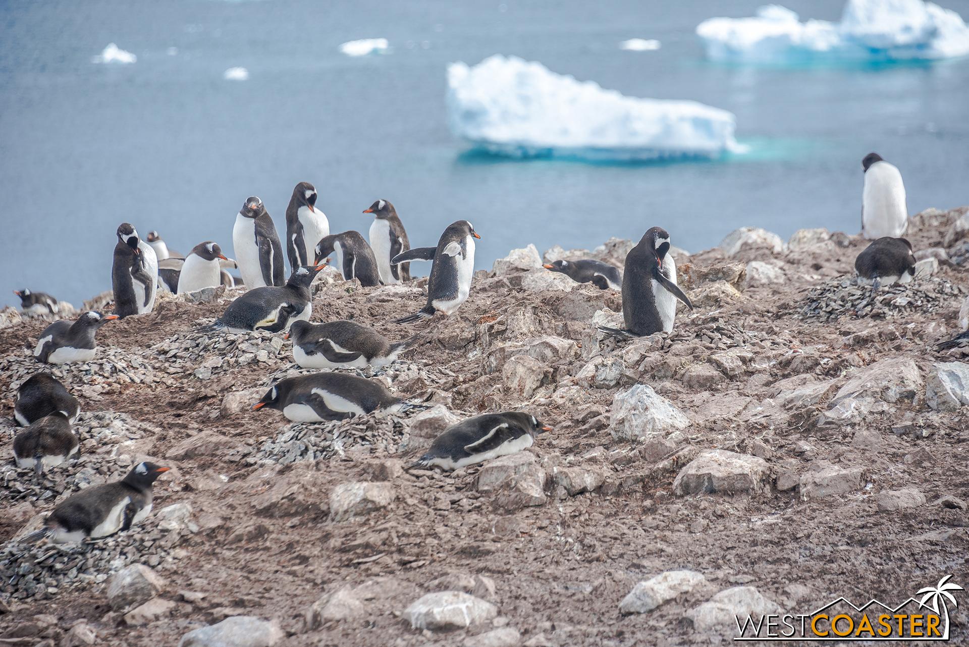 Antarctica-18_0207-0040.jpg