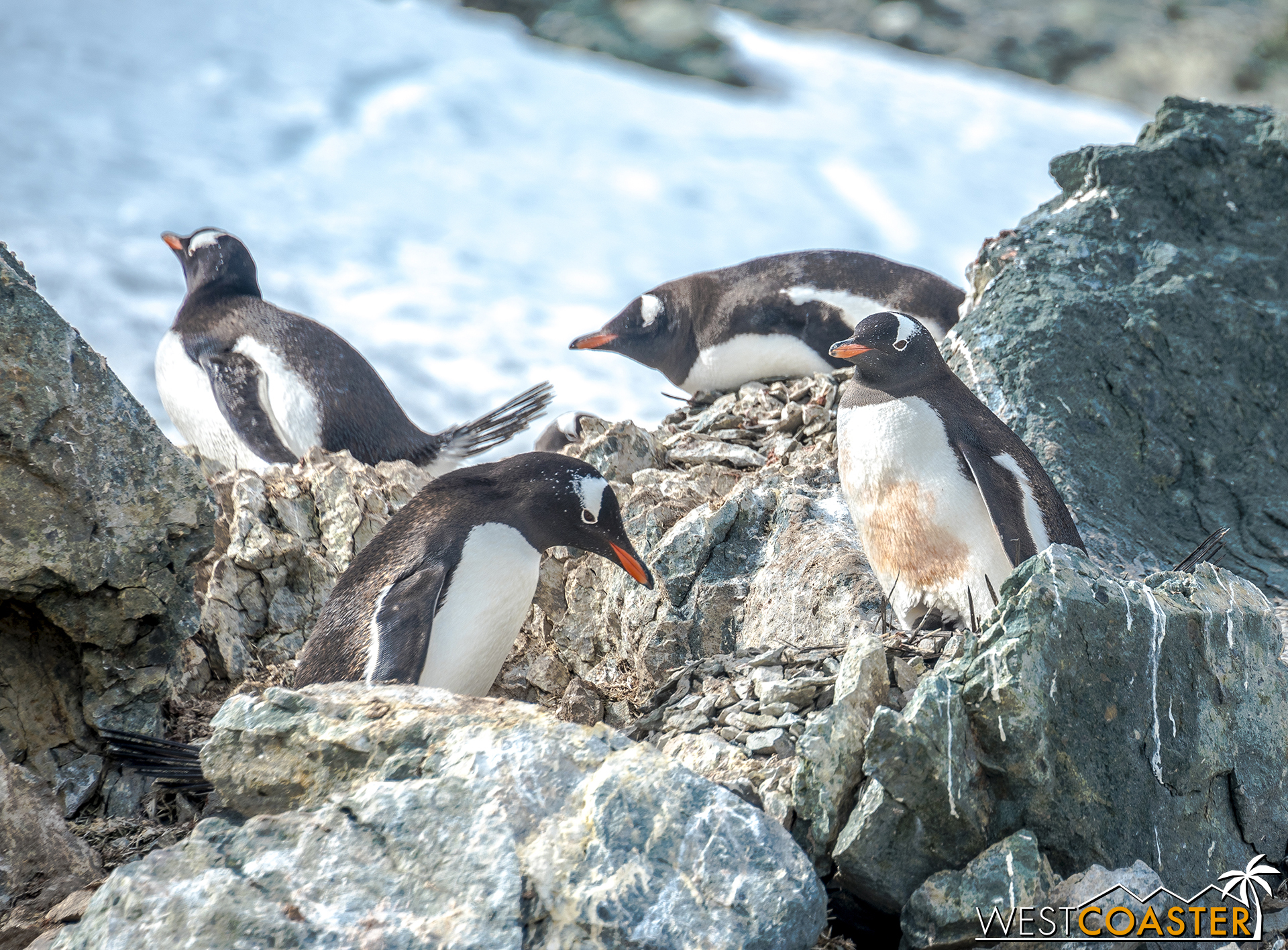 Antarctica-18_0207-0043.jpg