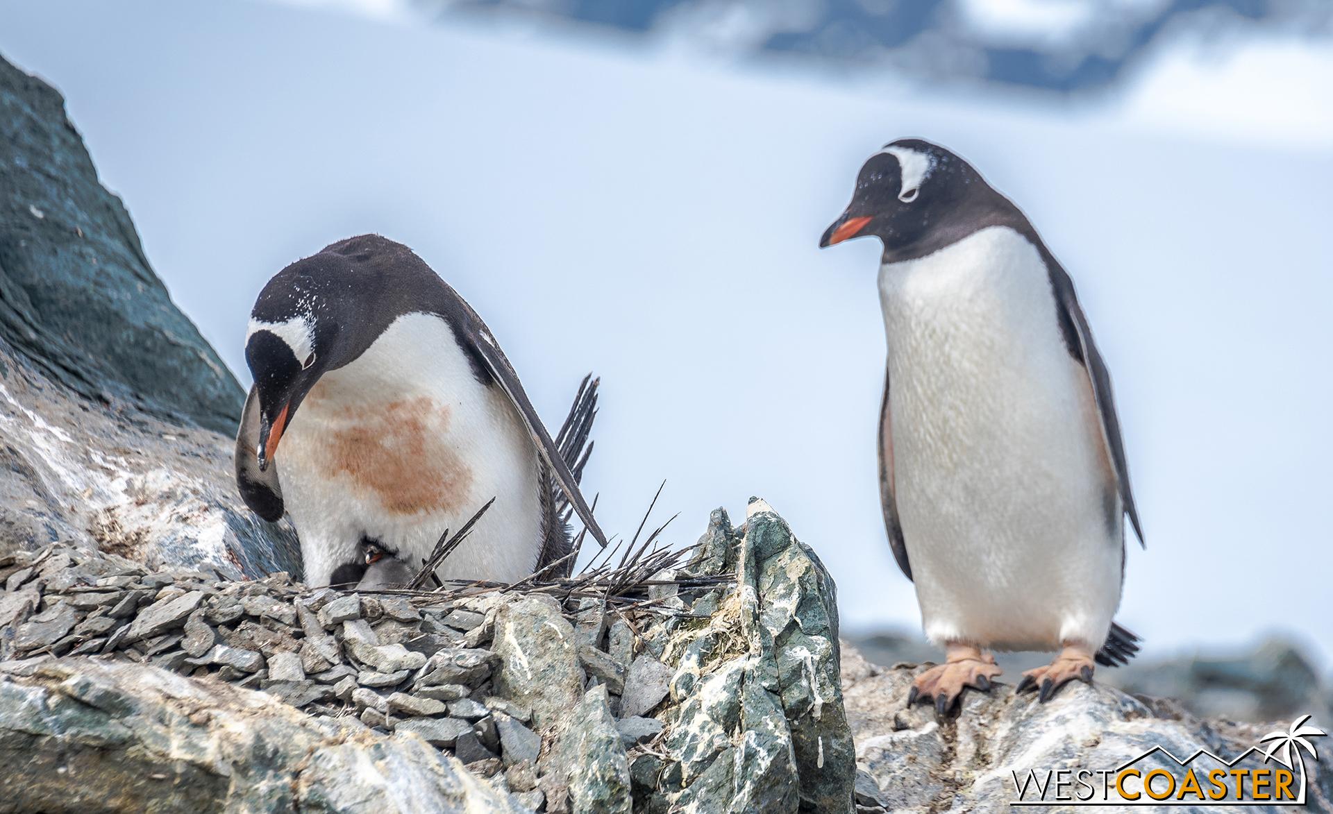 Antarctica-18_0207-0044.jpg