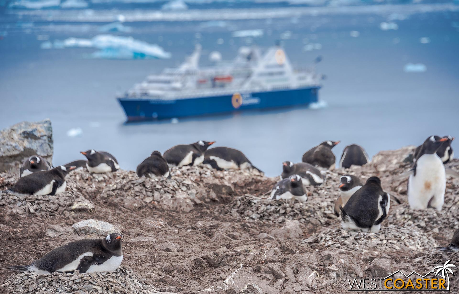 Antarctica-18_0207-0049.jpg