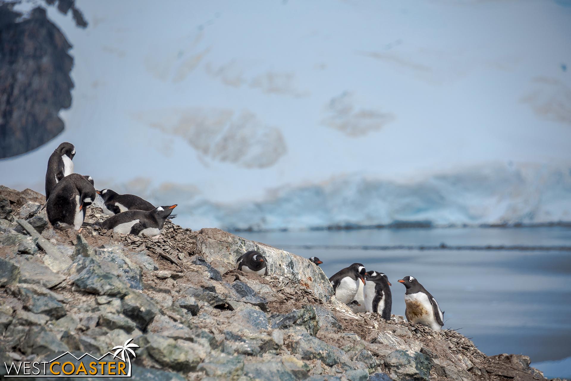 Antarctica-18_0207-0055.jpg