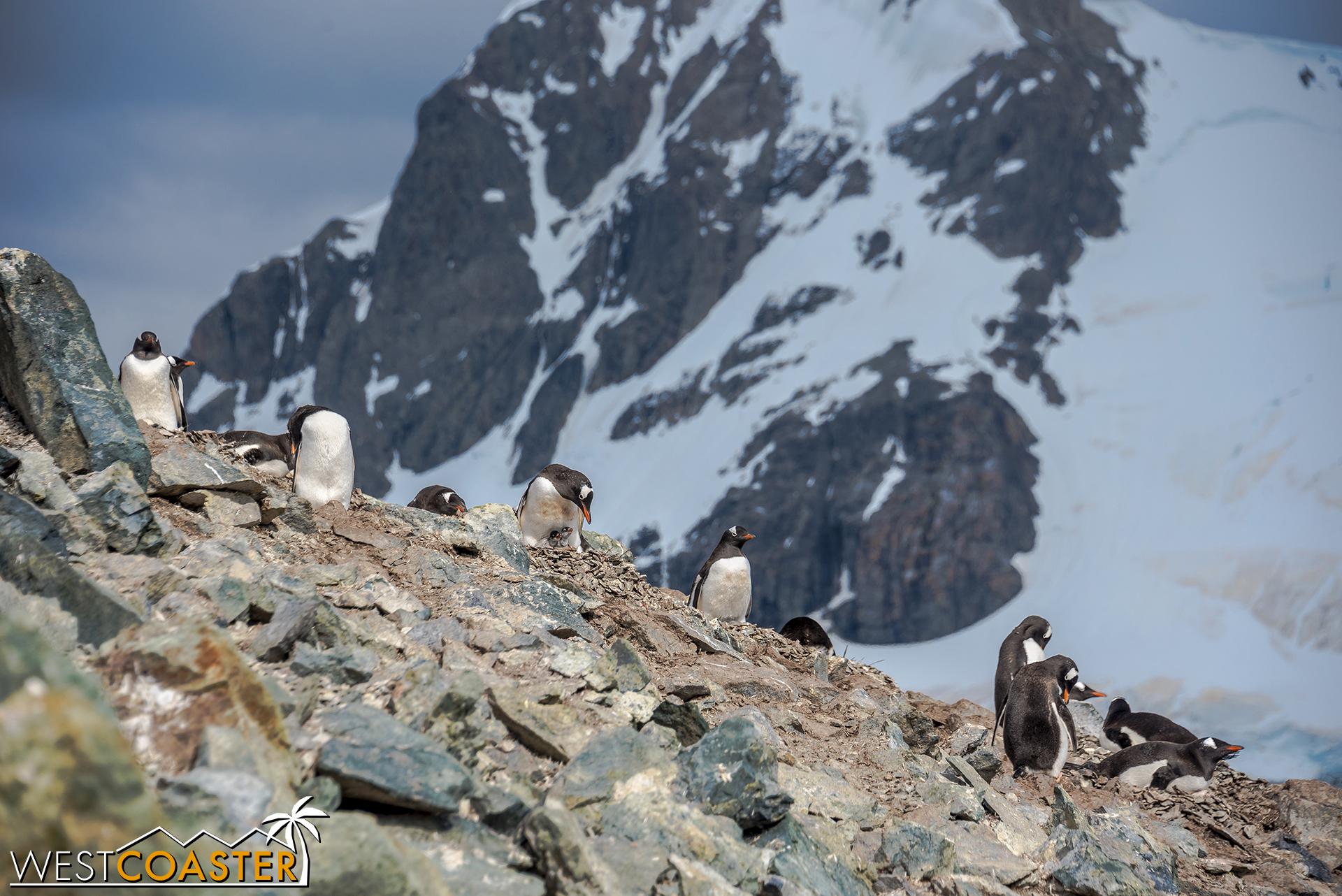 Antarctica-18_0207-0054.jpg
