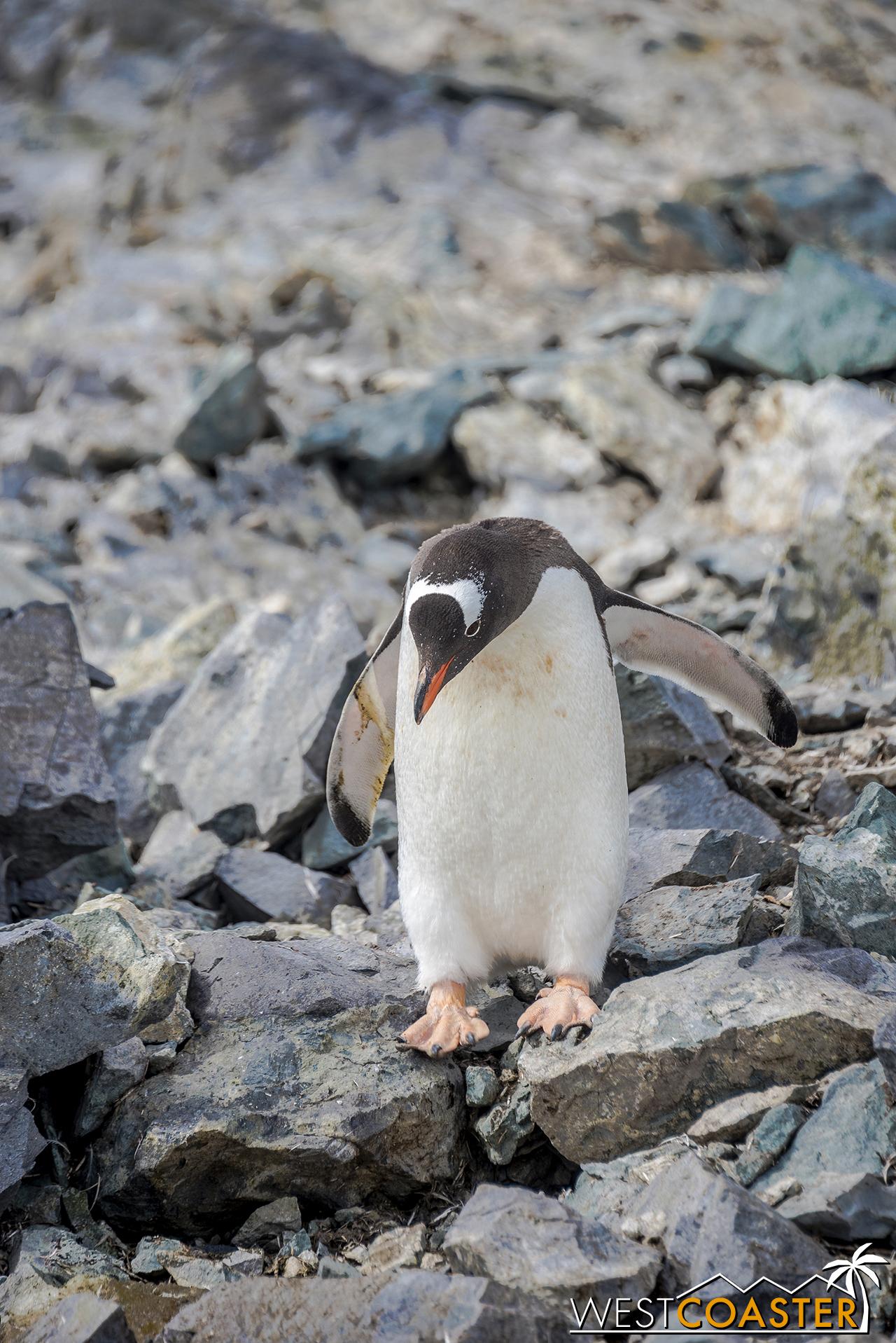 Antarctica-18_0207-0059.jpg