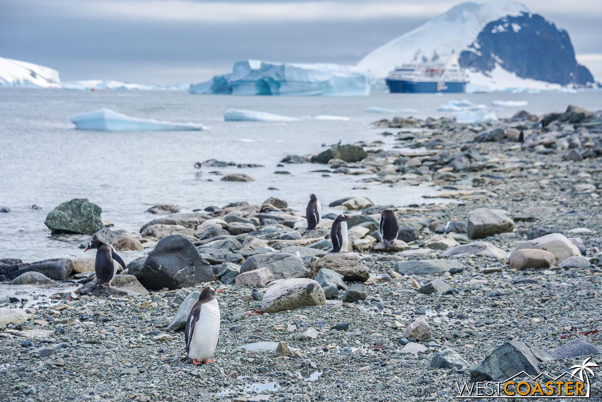 Antarctica-18_0207-0069.jpg