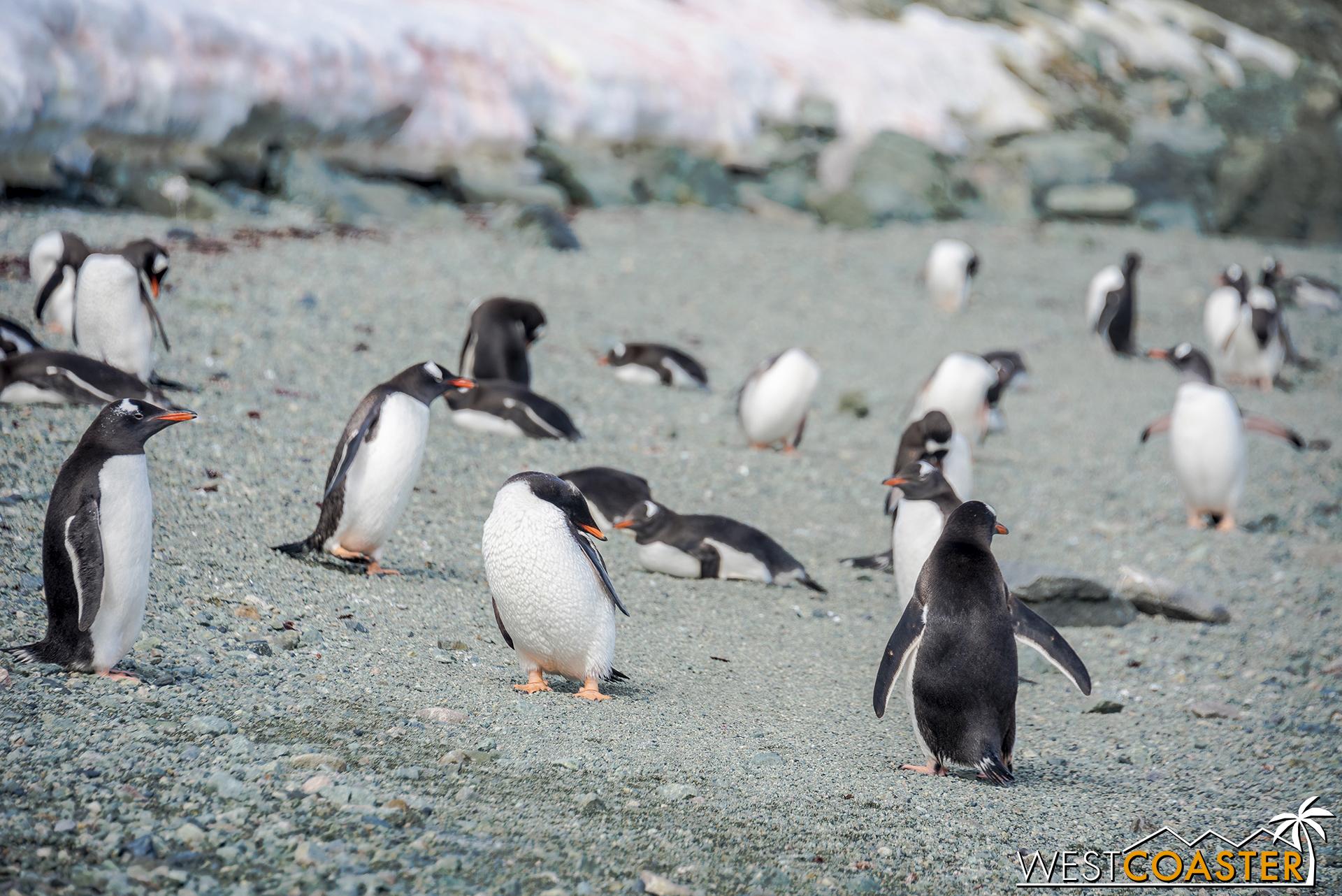 Antarctica-18_0207-0070.jpg