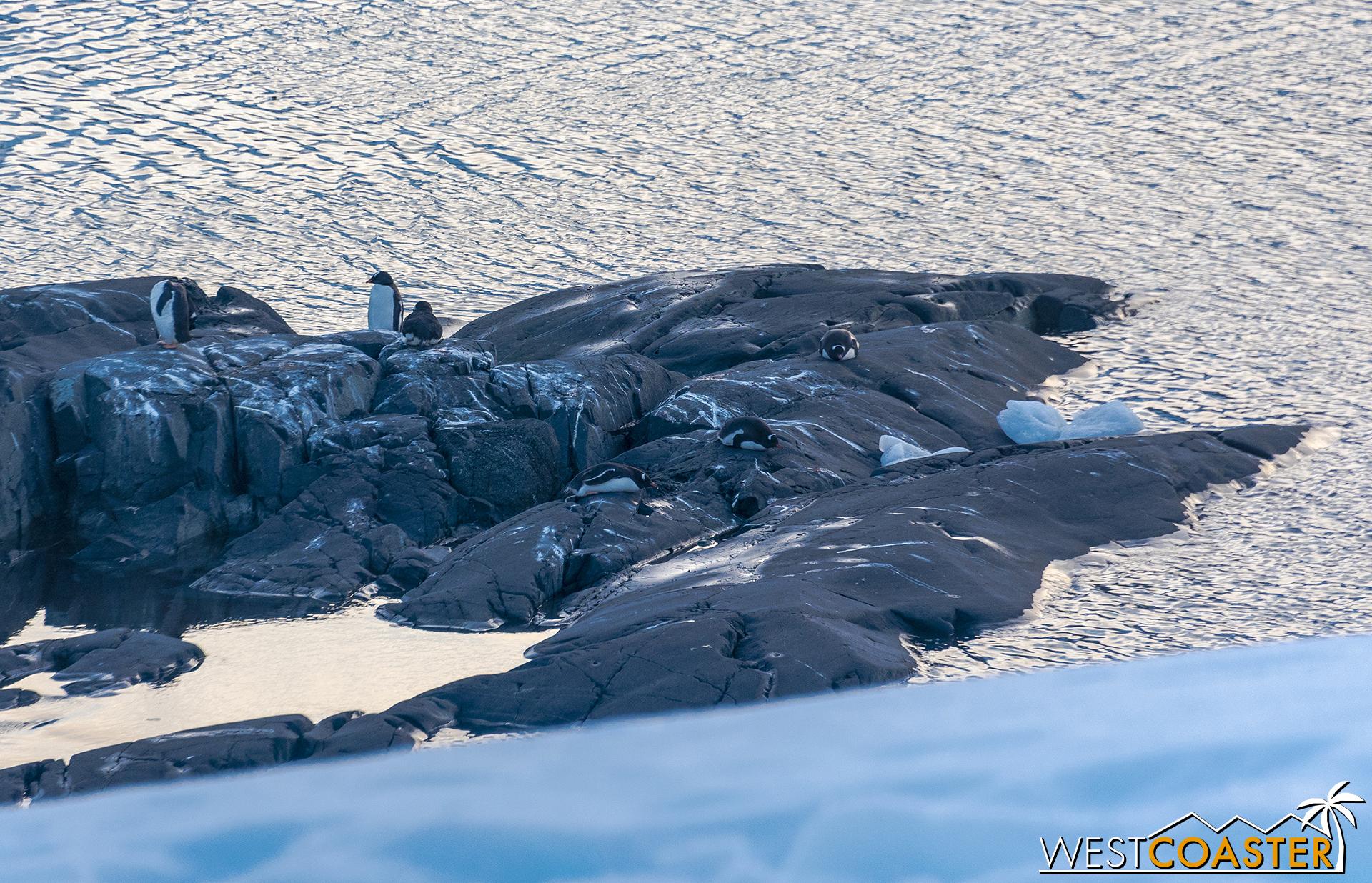 Antarctica-18_0228-0031.jpg