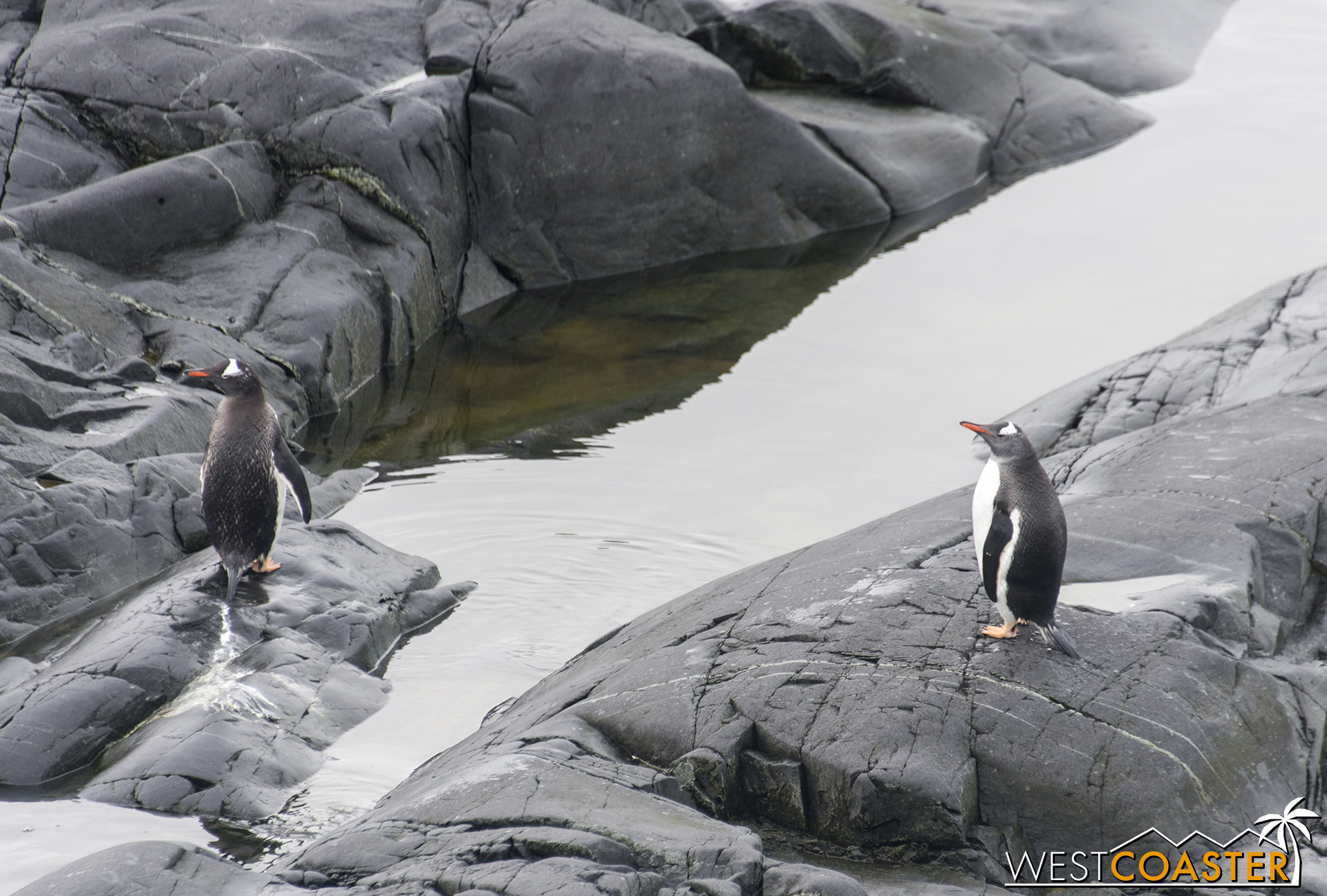 Antarctica-18_0228-0049.jpg