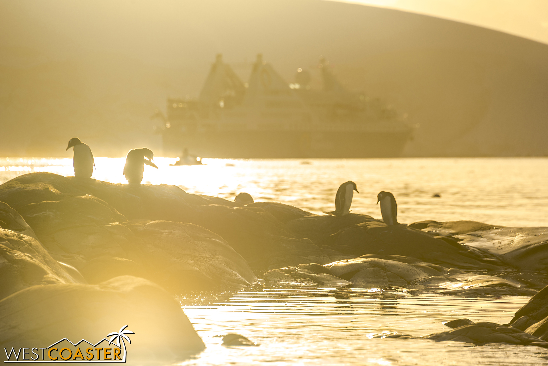 Penguins in the evening sun, with our  Ocean Diamond  in the background.