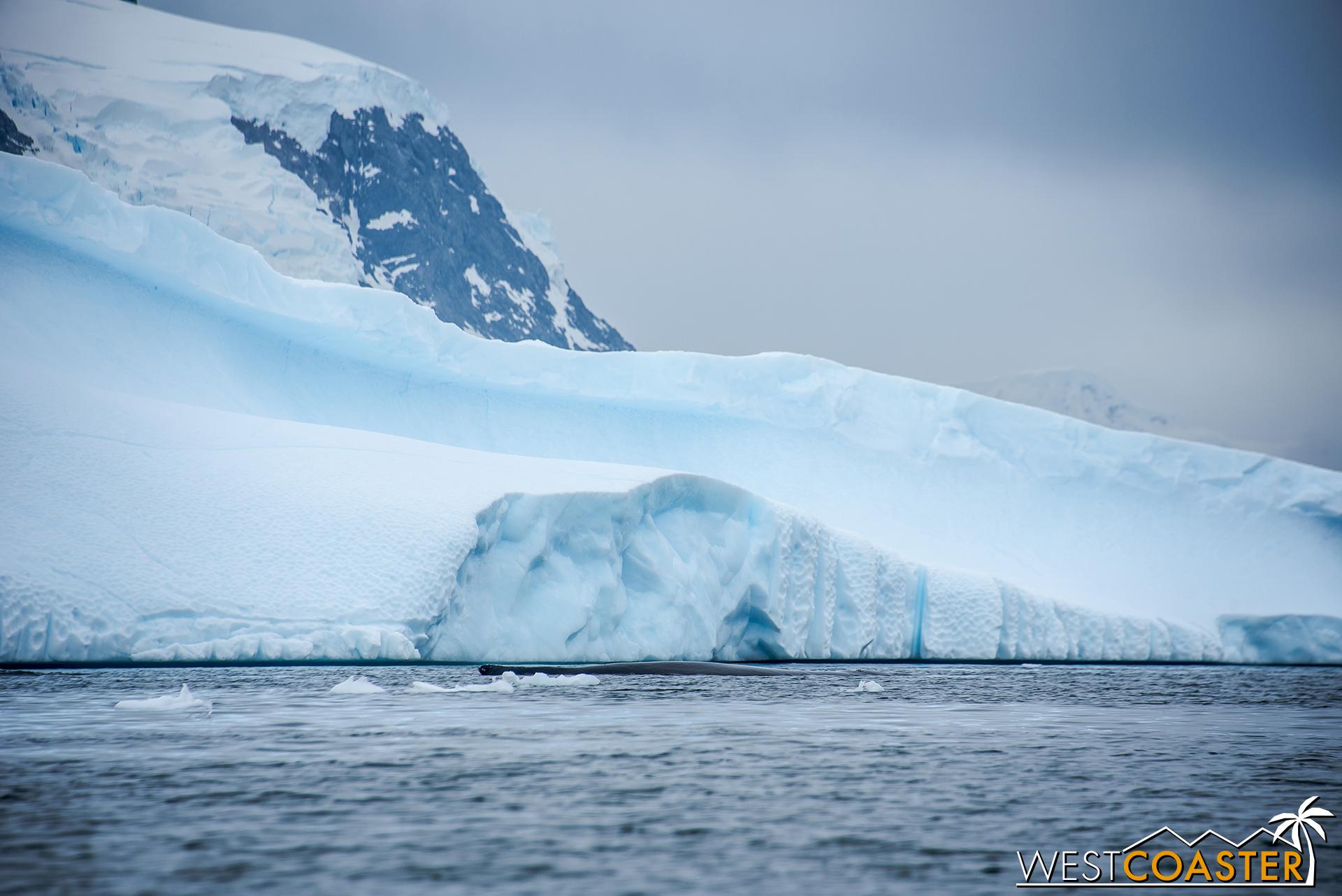 Antarctica-18_0314-0010.jpg