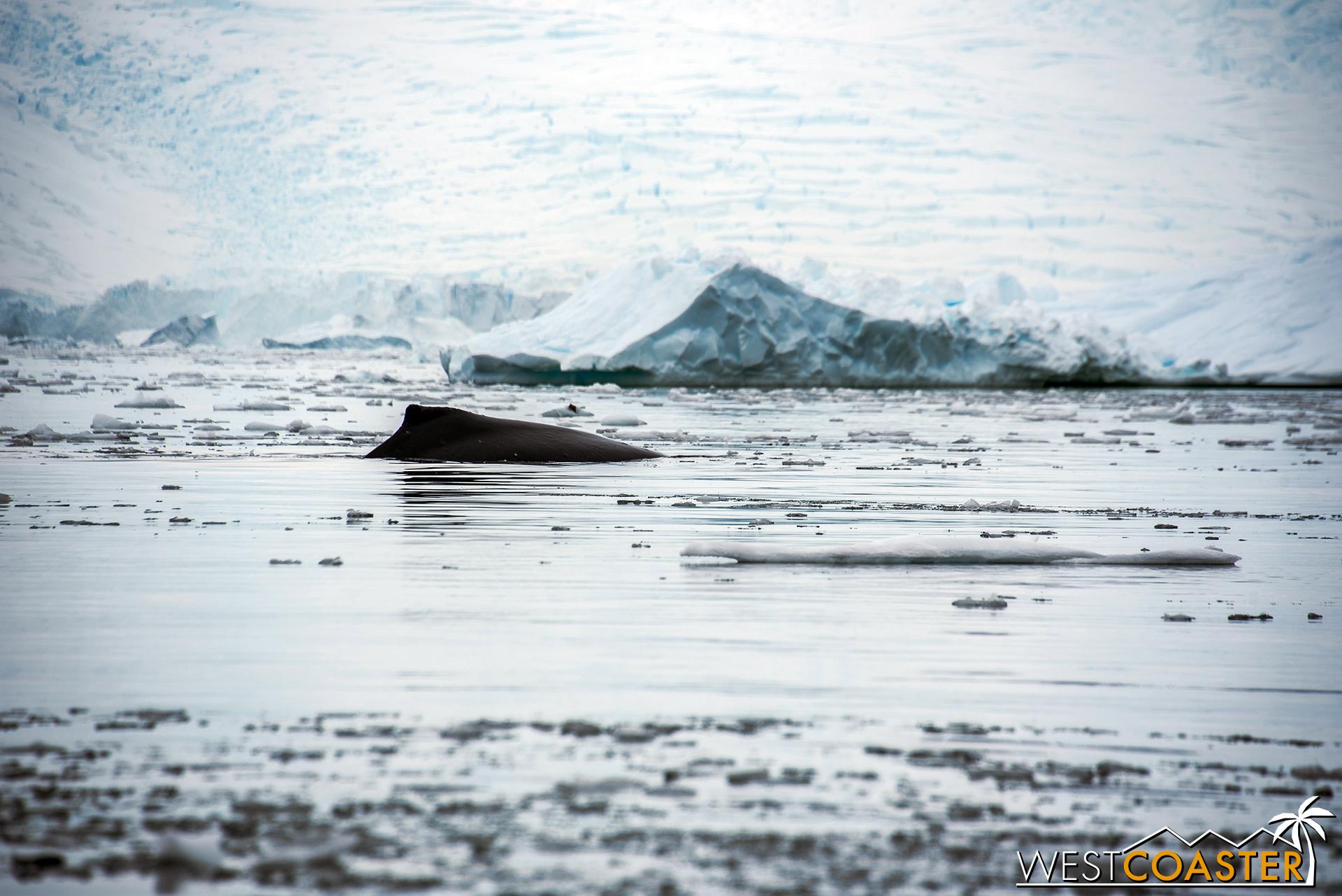 Antarctica-18_0314-0020.jpg