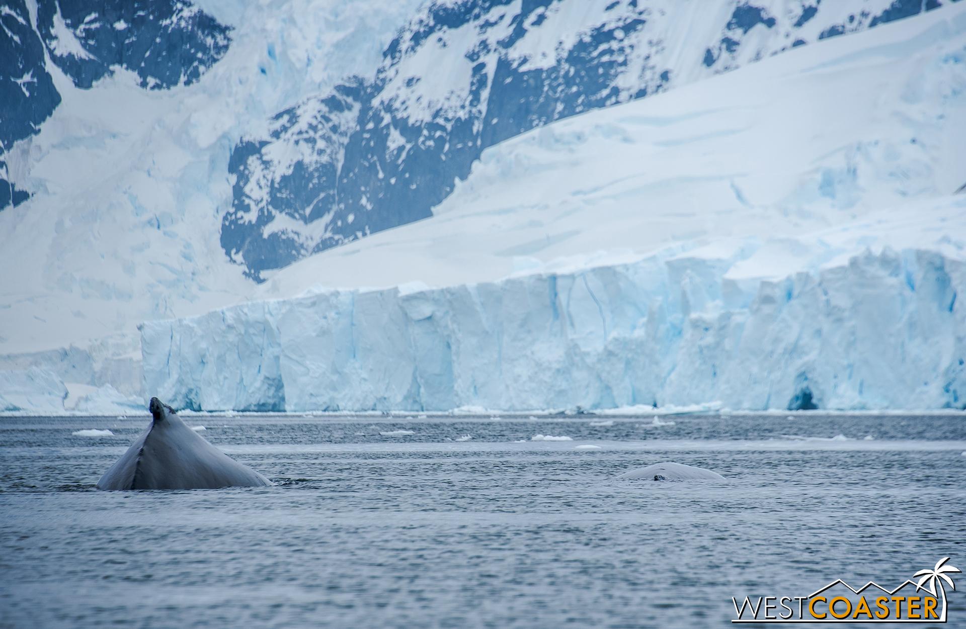 Antarctica-18_0314-0033.jpg