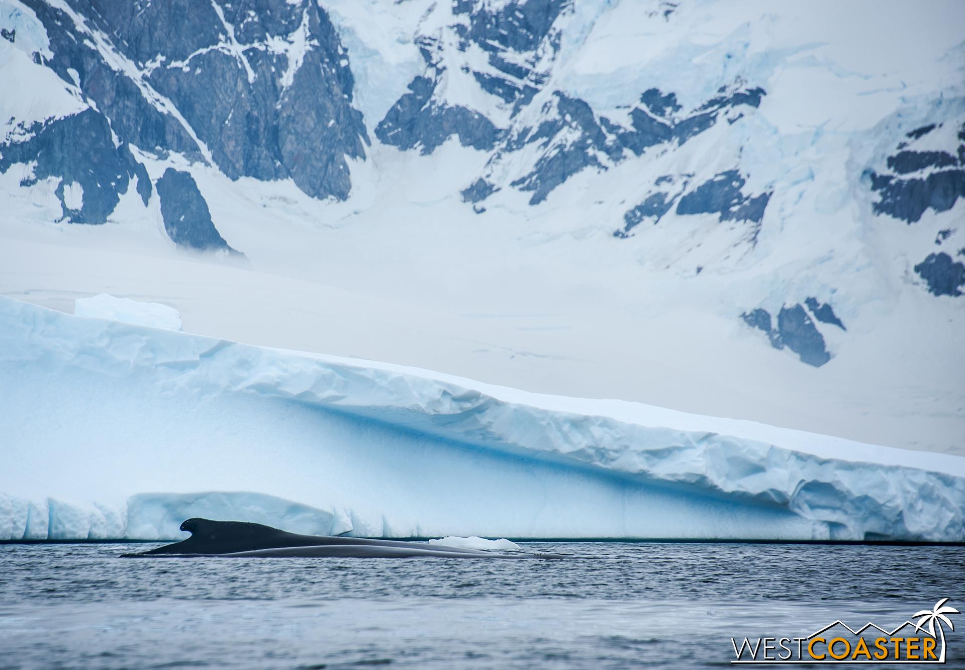 Antarctica-18_0314-0034.jpg
