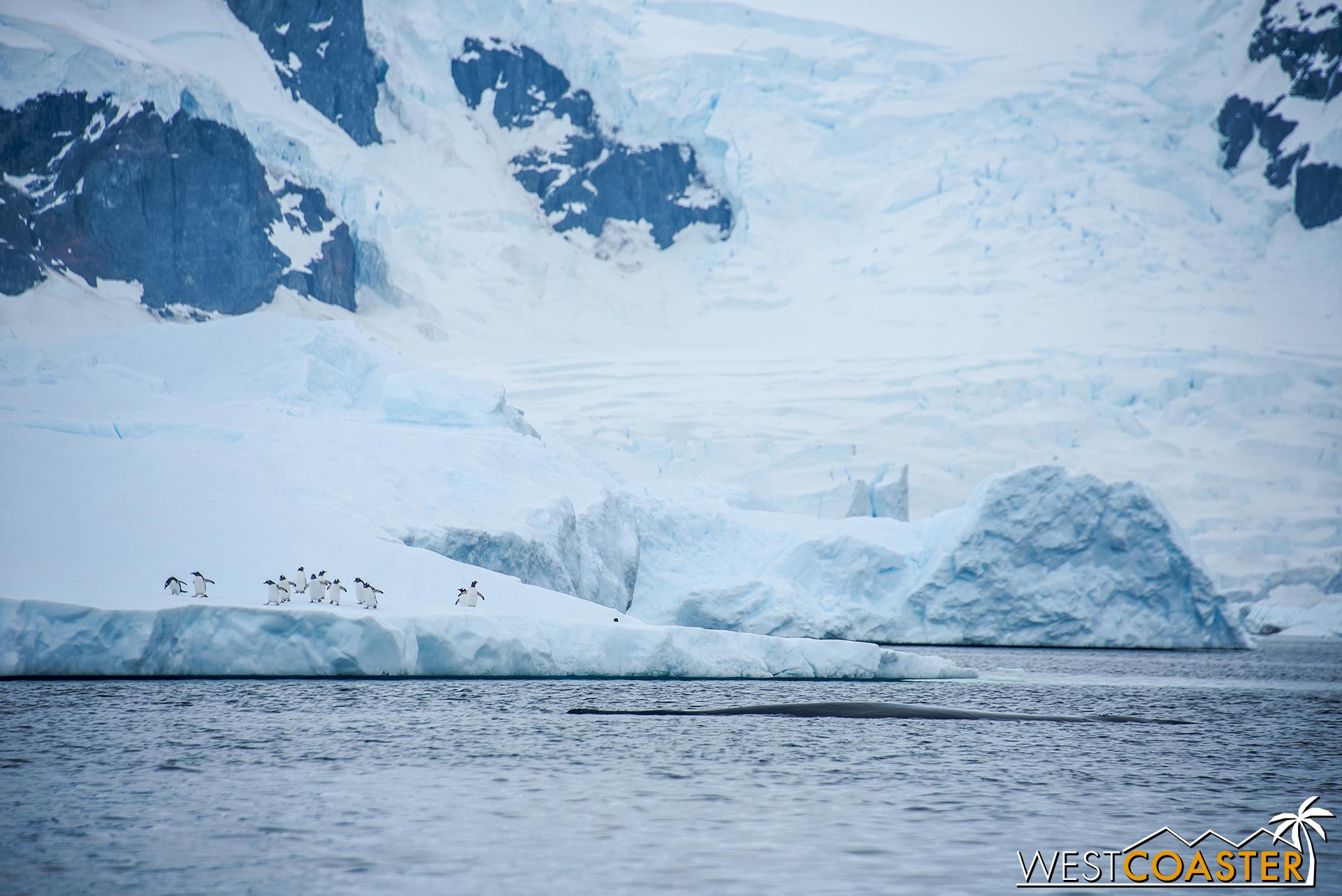 Antarctica-18_0314-0035.jpg