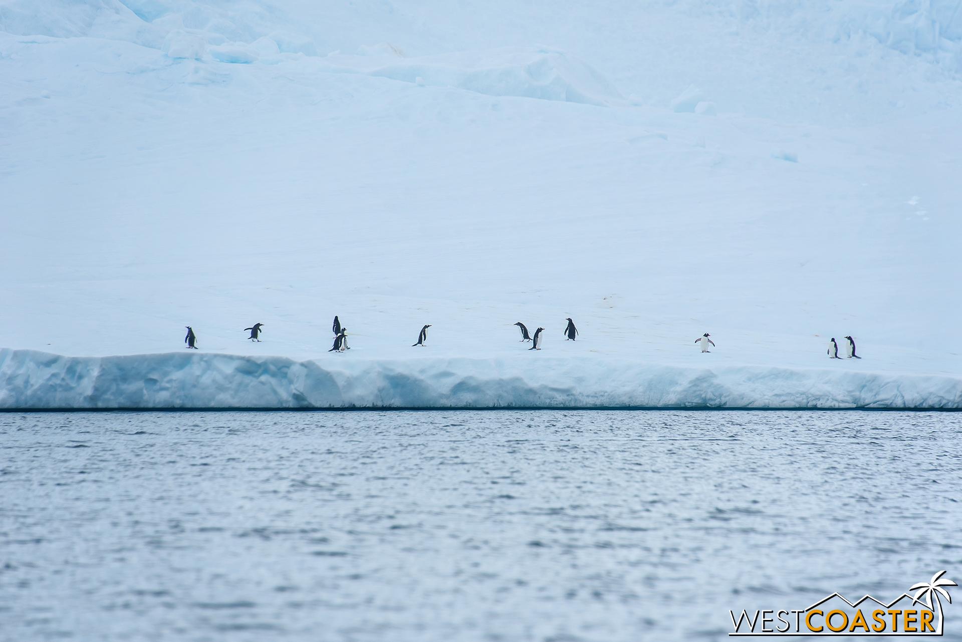 Antarctica-18_0314-0037.jpg