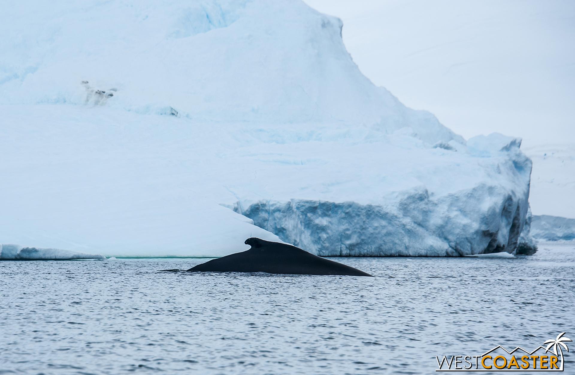 Antarctica-18_0314-0036.jpg