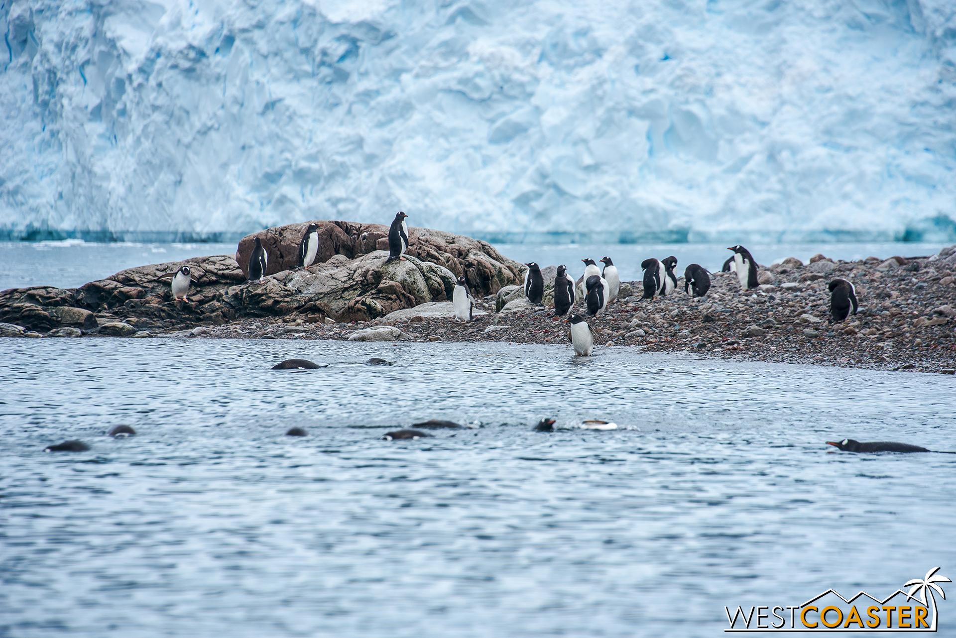 Antarctica-18_0314-0046.jpg