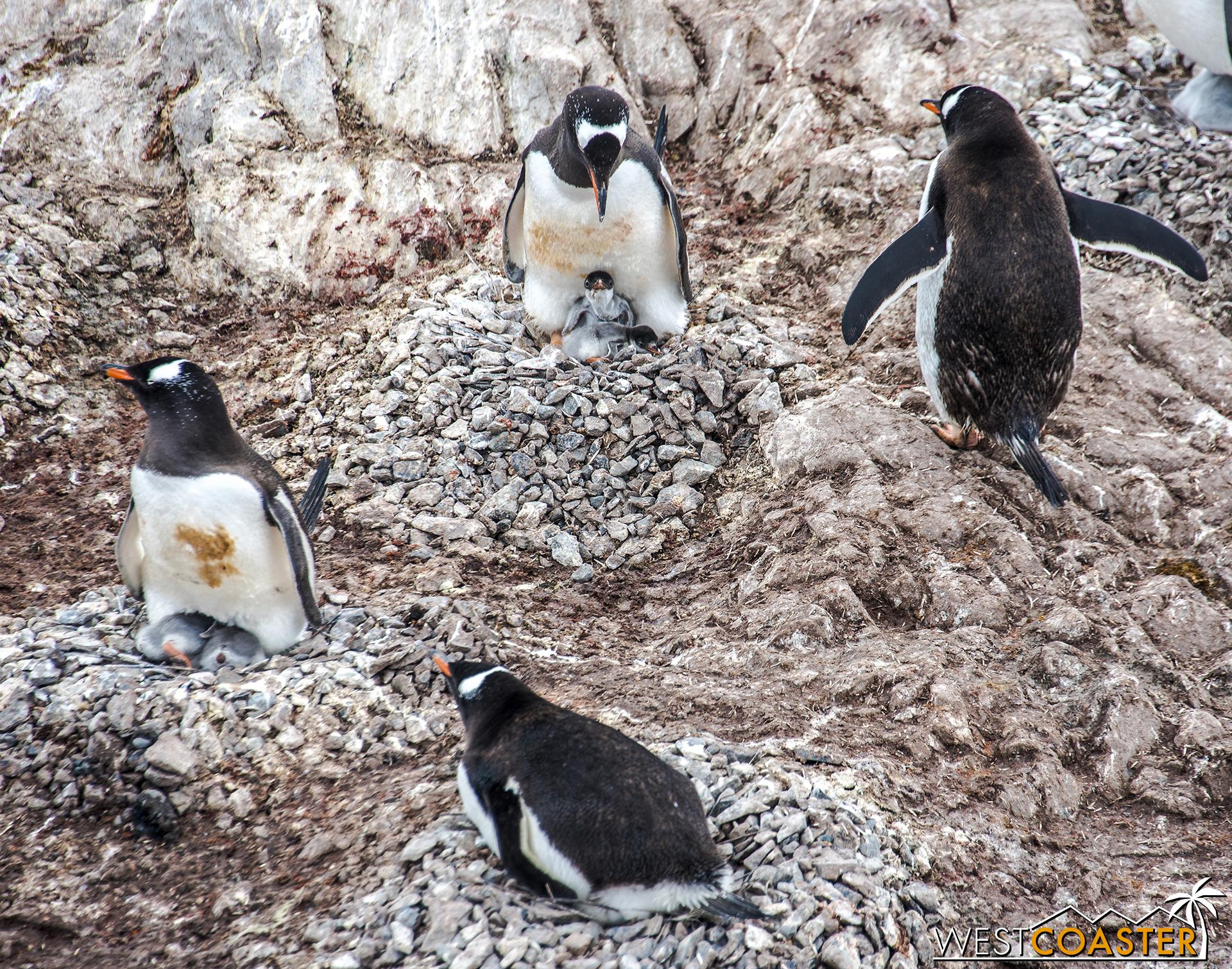 Antarctica-18_0314-0048.jpg