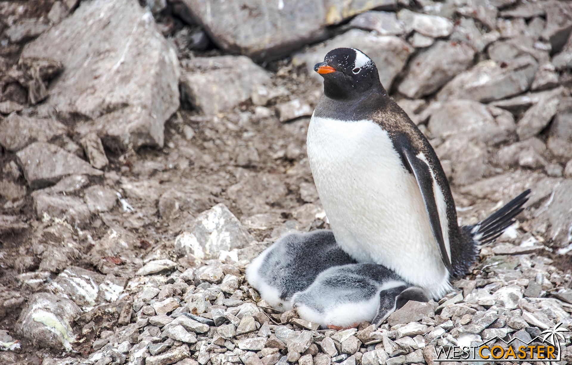 Antarctica-18_0314-0051.jpg