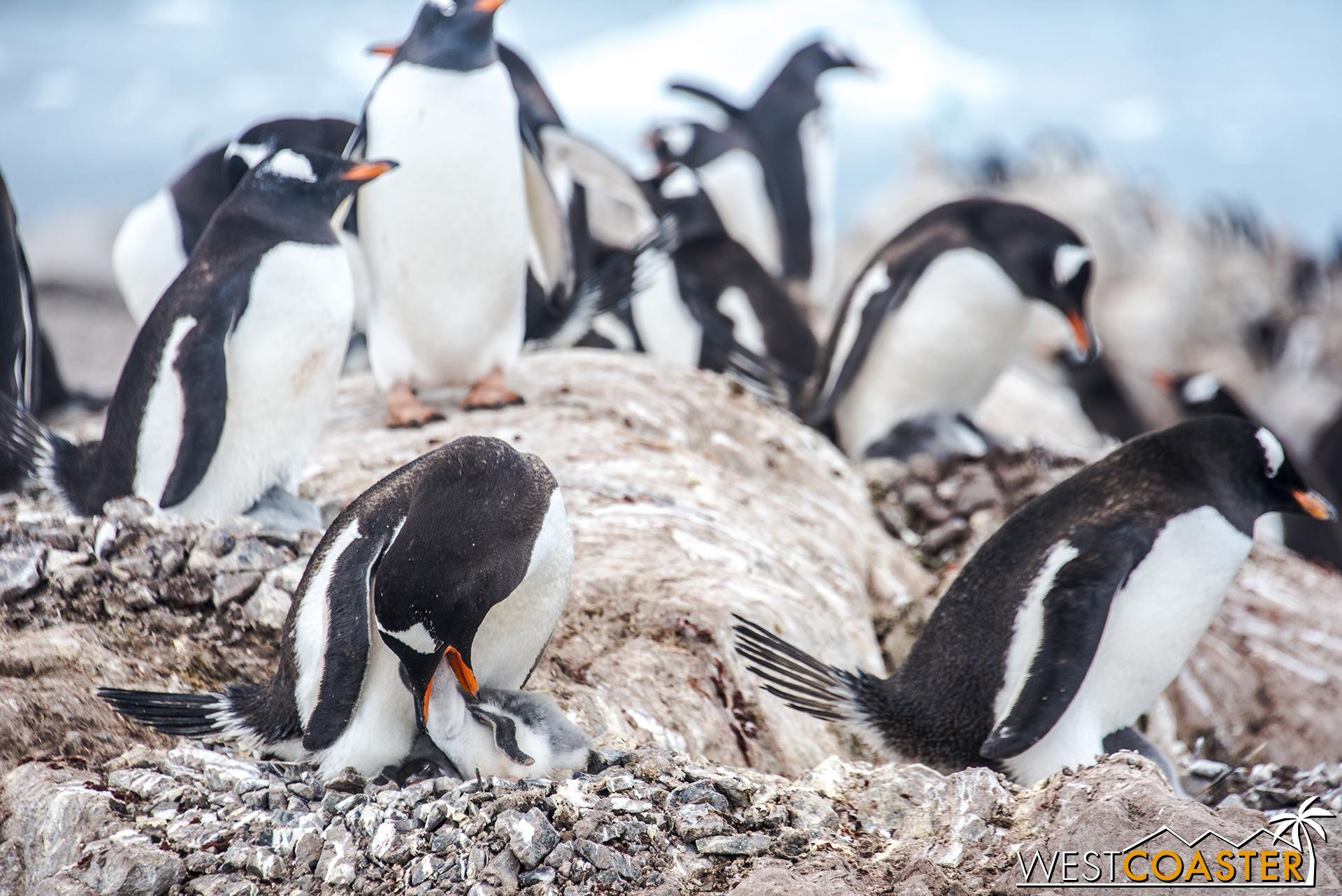 Antarctica-18_0314-0060.jpg