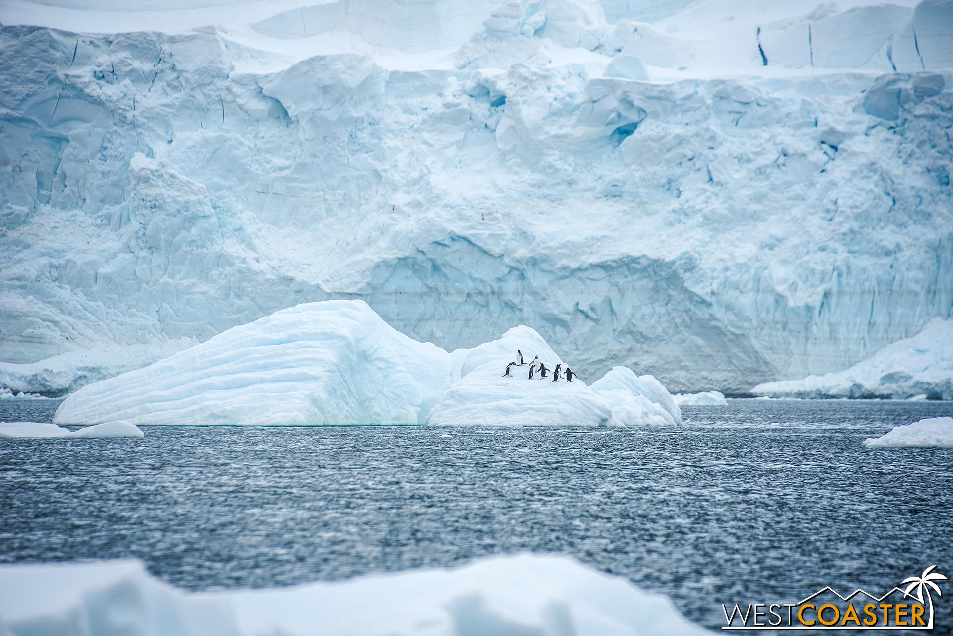 Some penguins call an iceberg home.