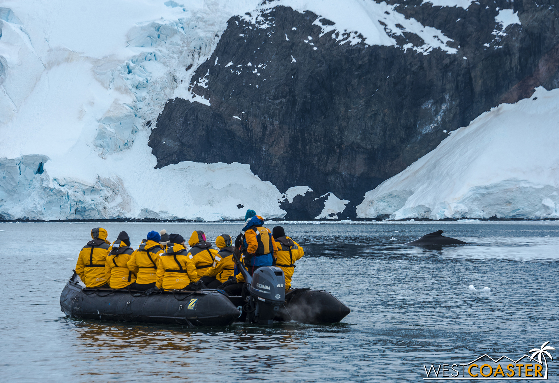 A humpback whale surfaces in front of a Quark Expeditions Zodiac boat.