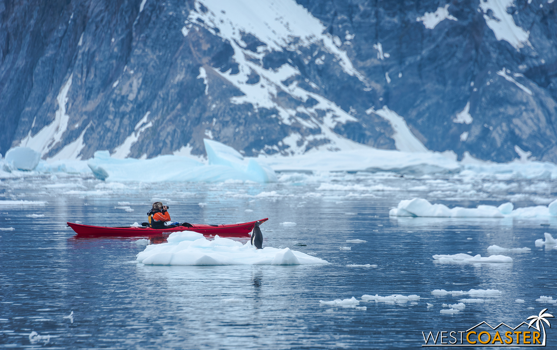 A penguin checks out what a kayaker is photographing.