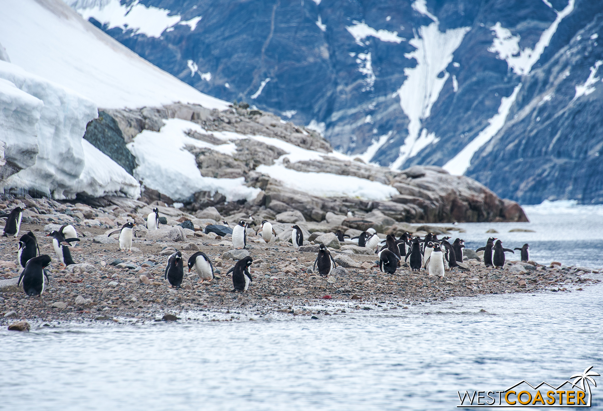 Penguins line the beach and observe their new visitors.