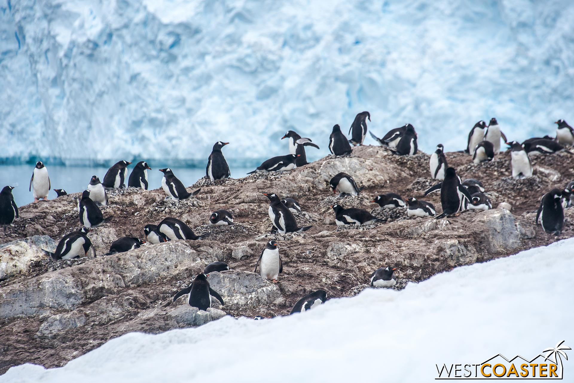Penguins everywhere we look.