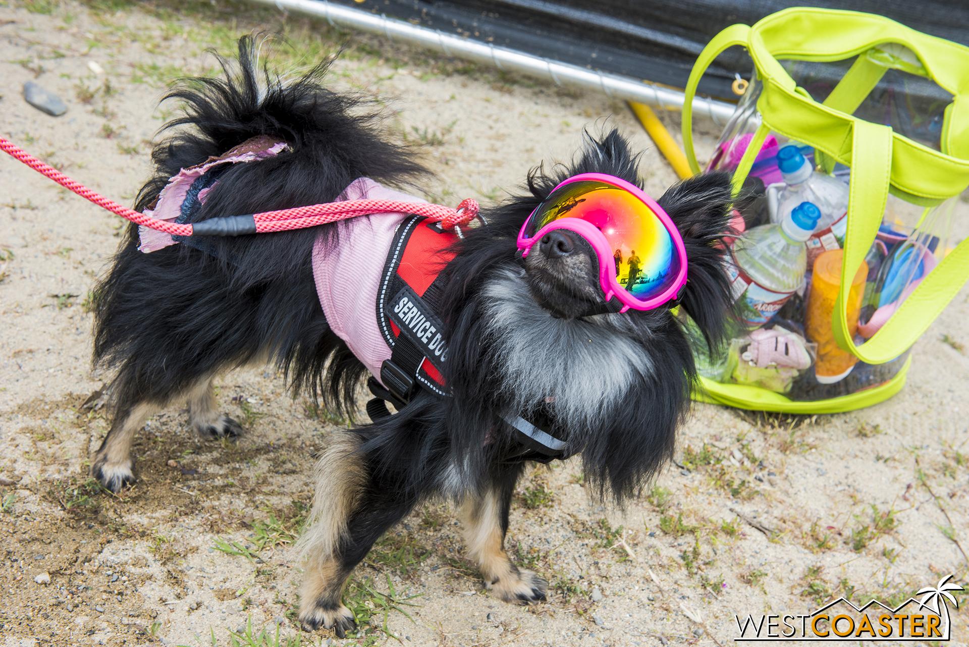 Even furry, four-legged creatures got into some of the celebratory spirit.