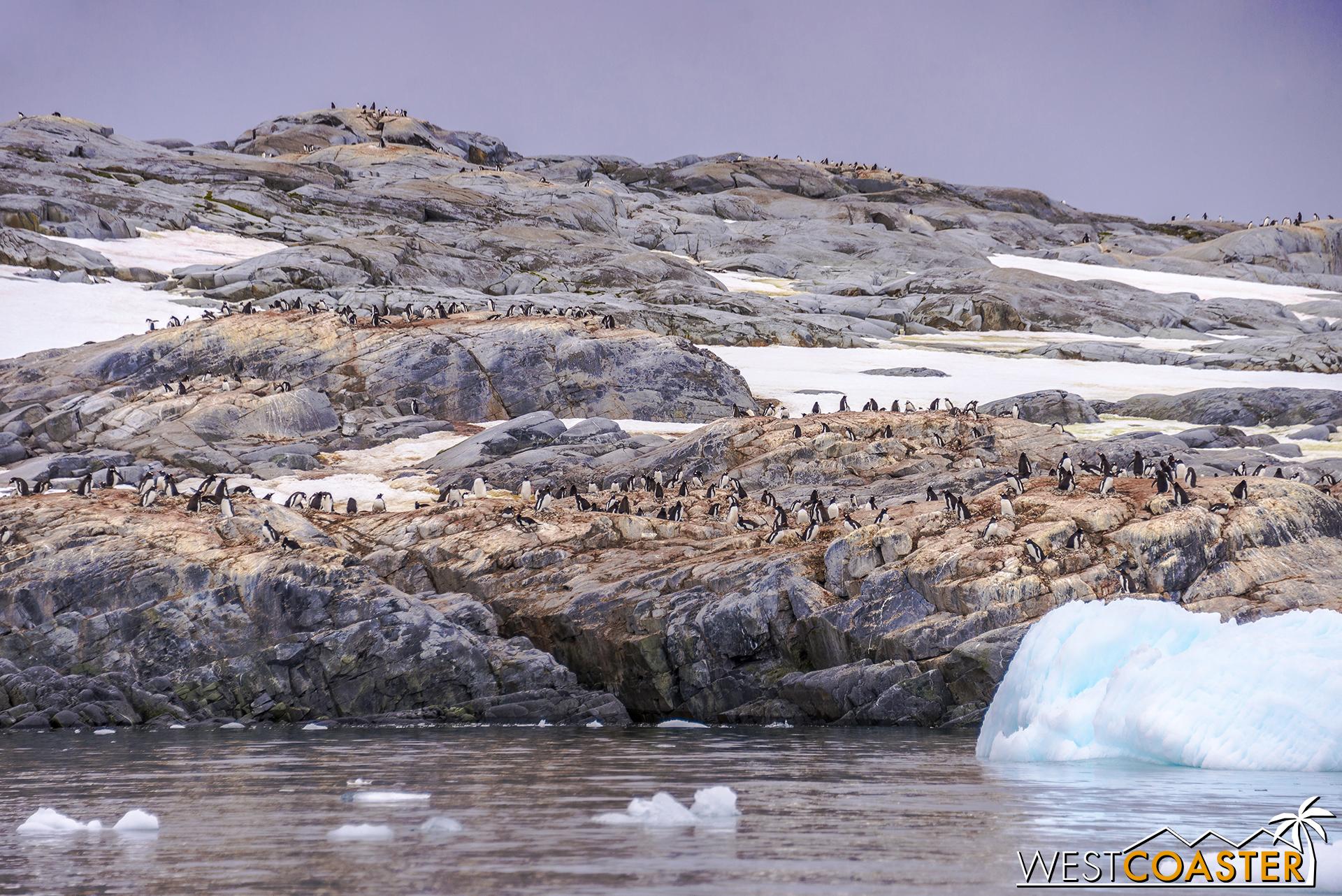Antarctica-18_0609-0002.jpg